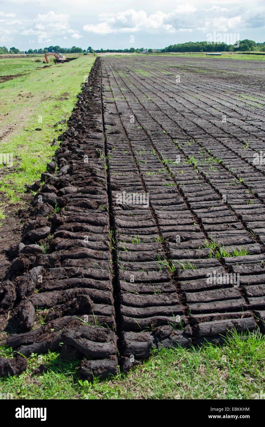 peat cutting, sods of peat, Germany, Lower Saxony, Wilhelmsfehn Stock Photo