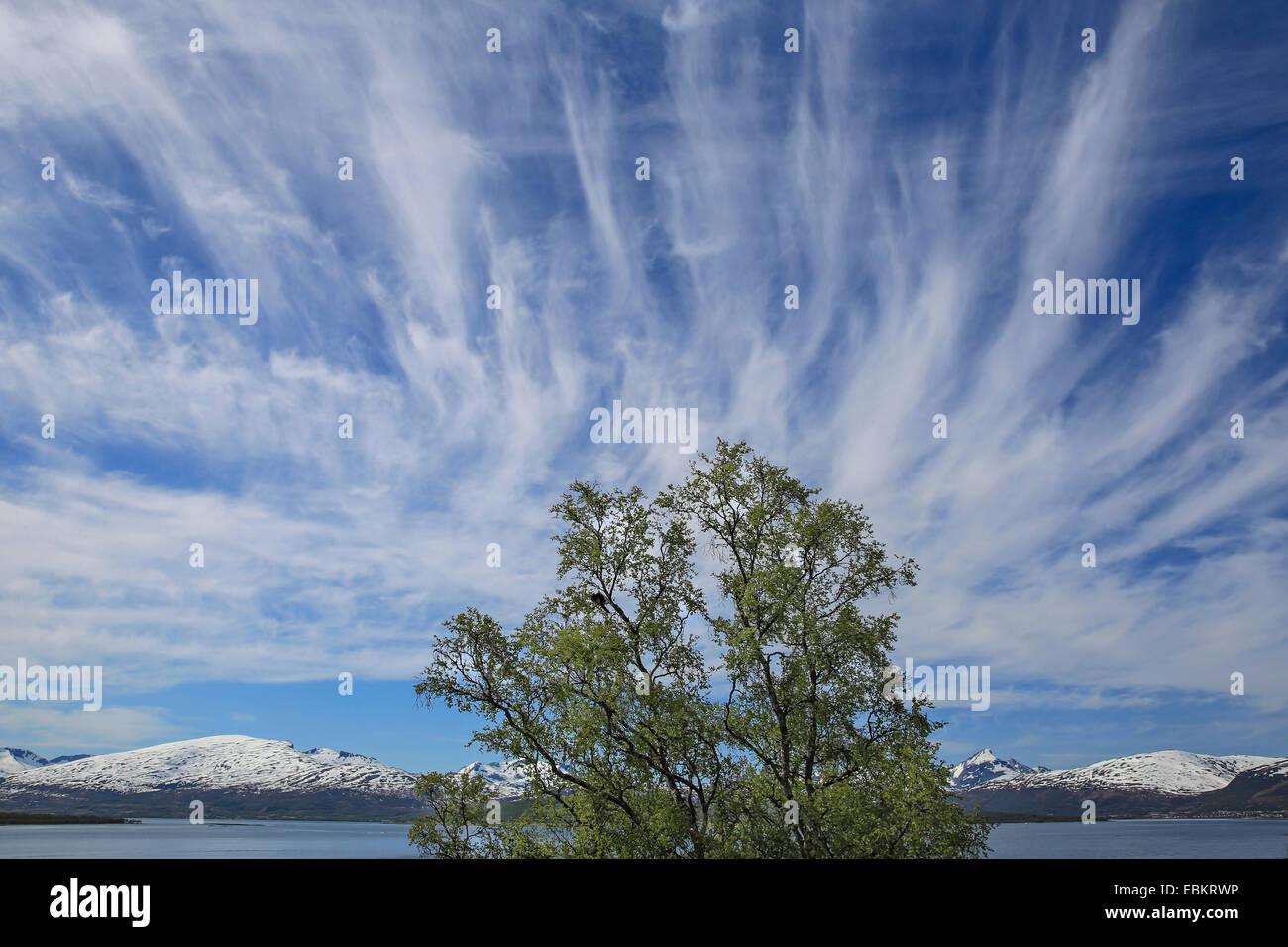 cirrus clouds, Norway, Troms, Tromsoe Stock Photo
