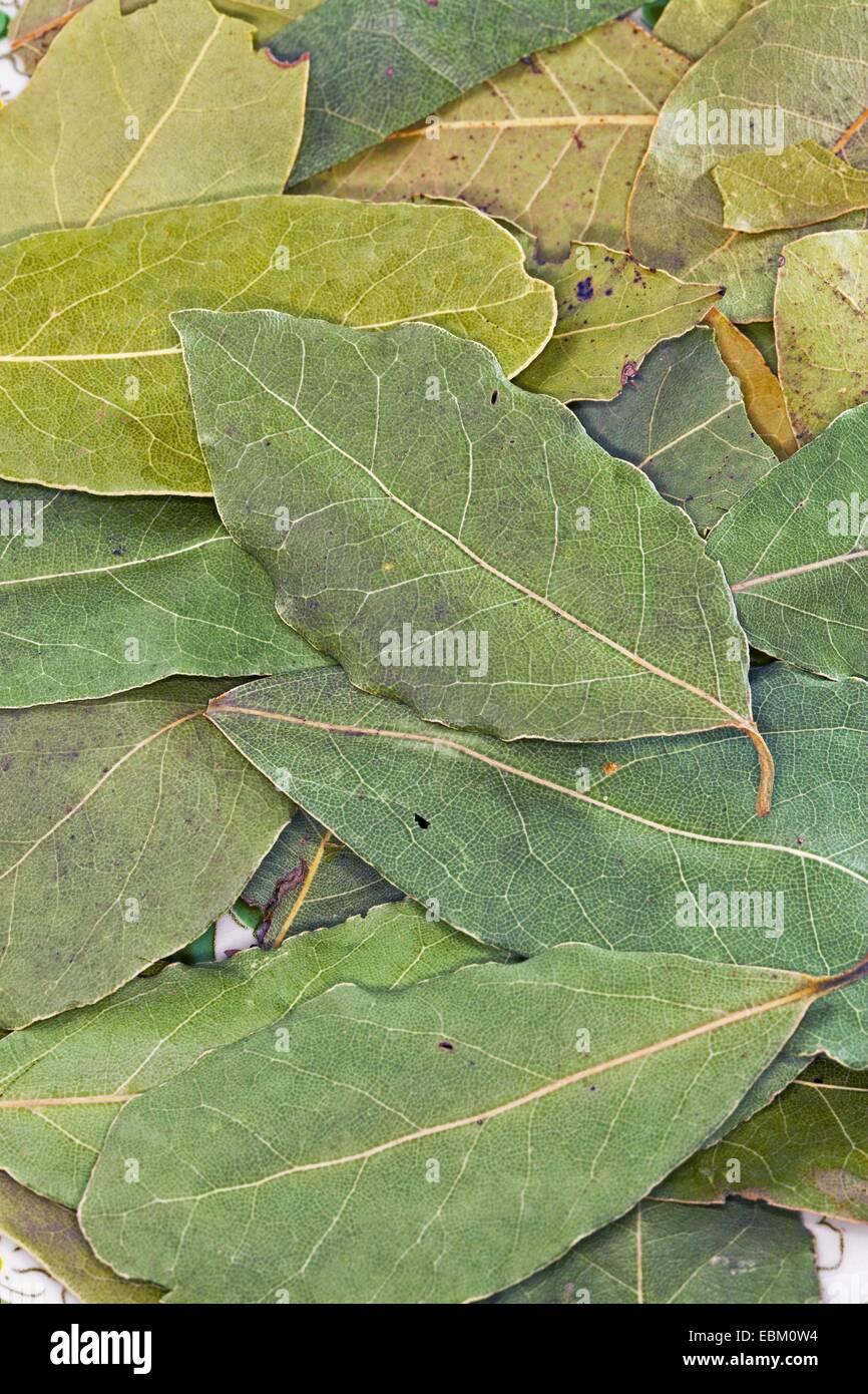 sweet bay laurel, bay tree, sweet bay (Laurus nobilis), dried leaves of a sweet bay - Stock Image