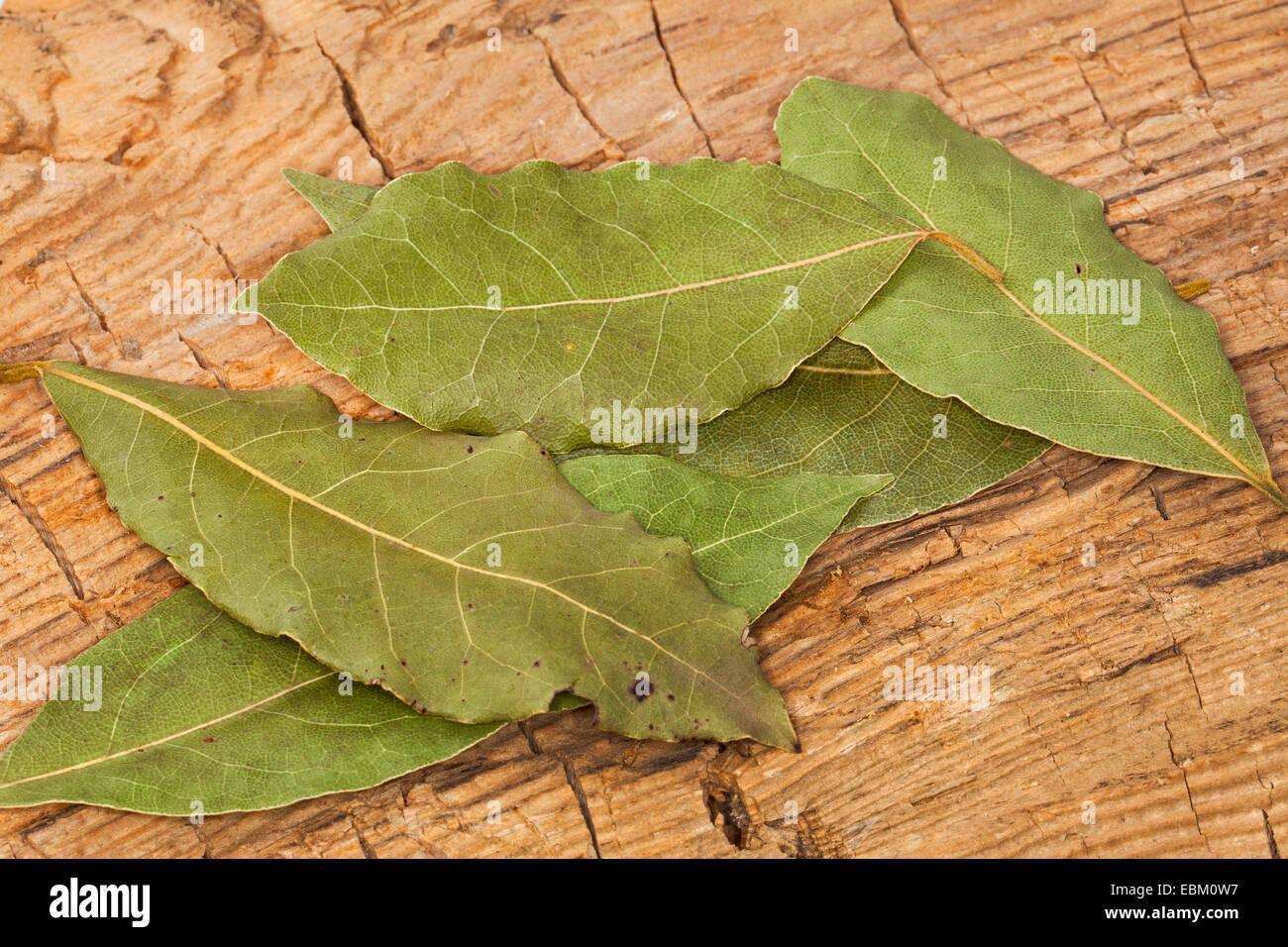 sweet bay laurel, bay tree, sweet bay (Laurus nobilis), dried leaves of sweet bay - Stock Image
