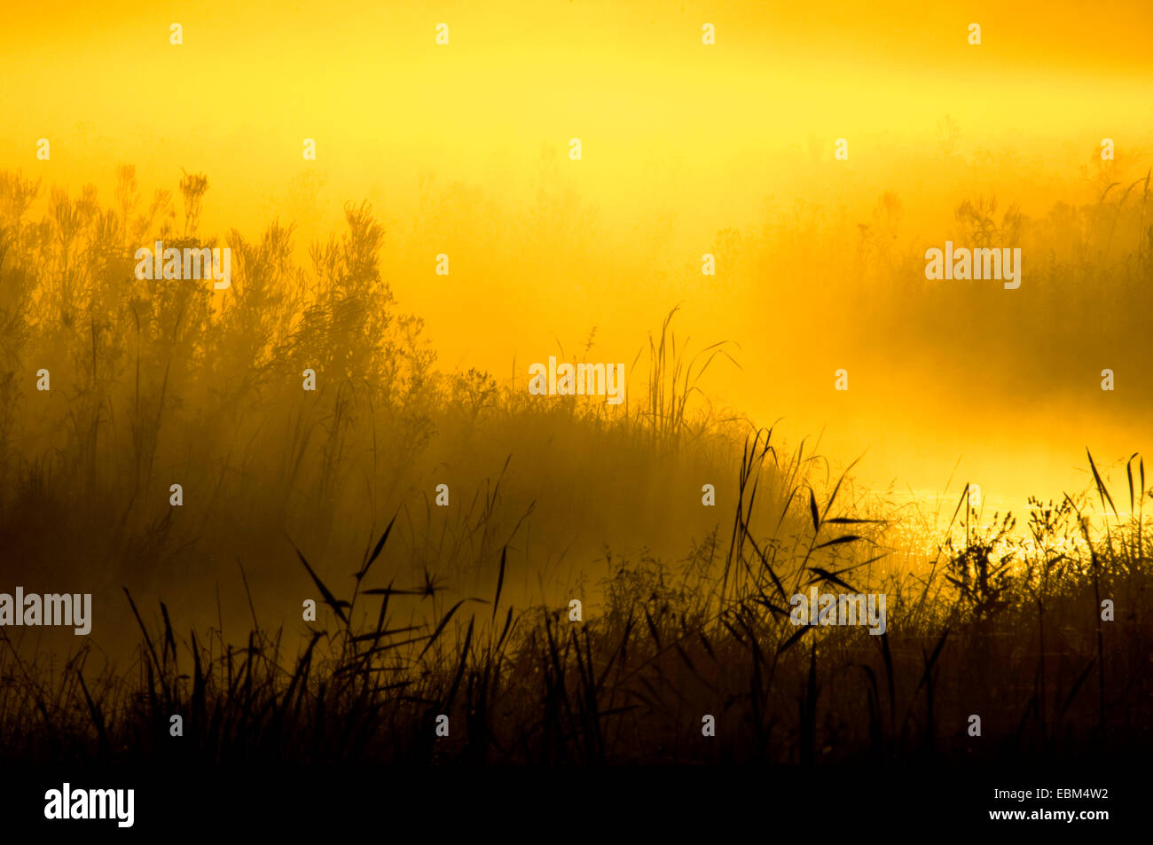 Sunrise on marsh land, near Goose Pond, Linton, Indiana, USA.Stock Photo