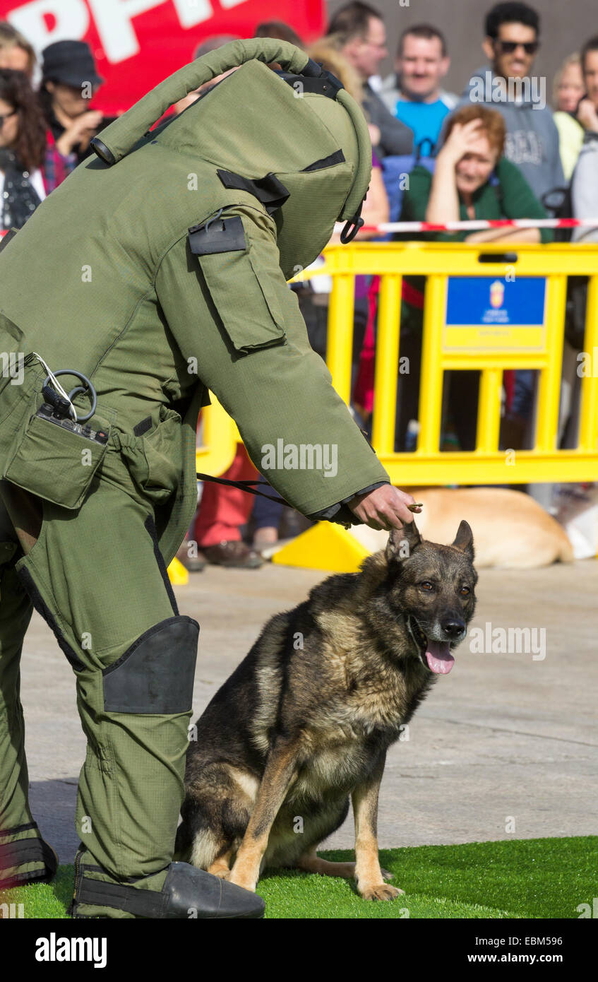 Explosives sniffer dog and handler giving demonstration at dog show in Spain - Stock Image