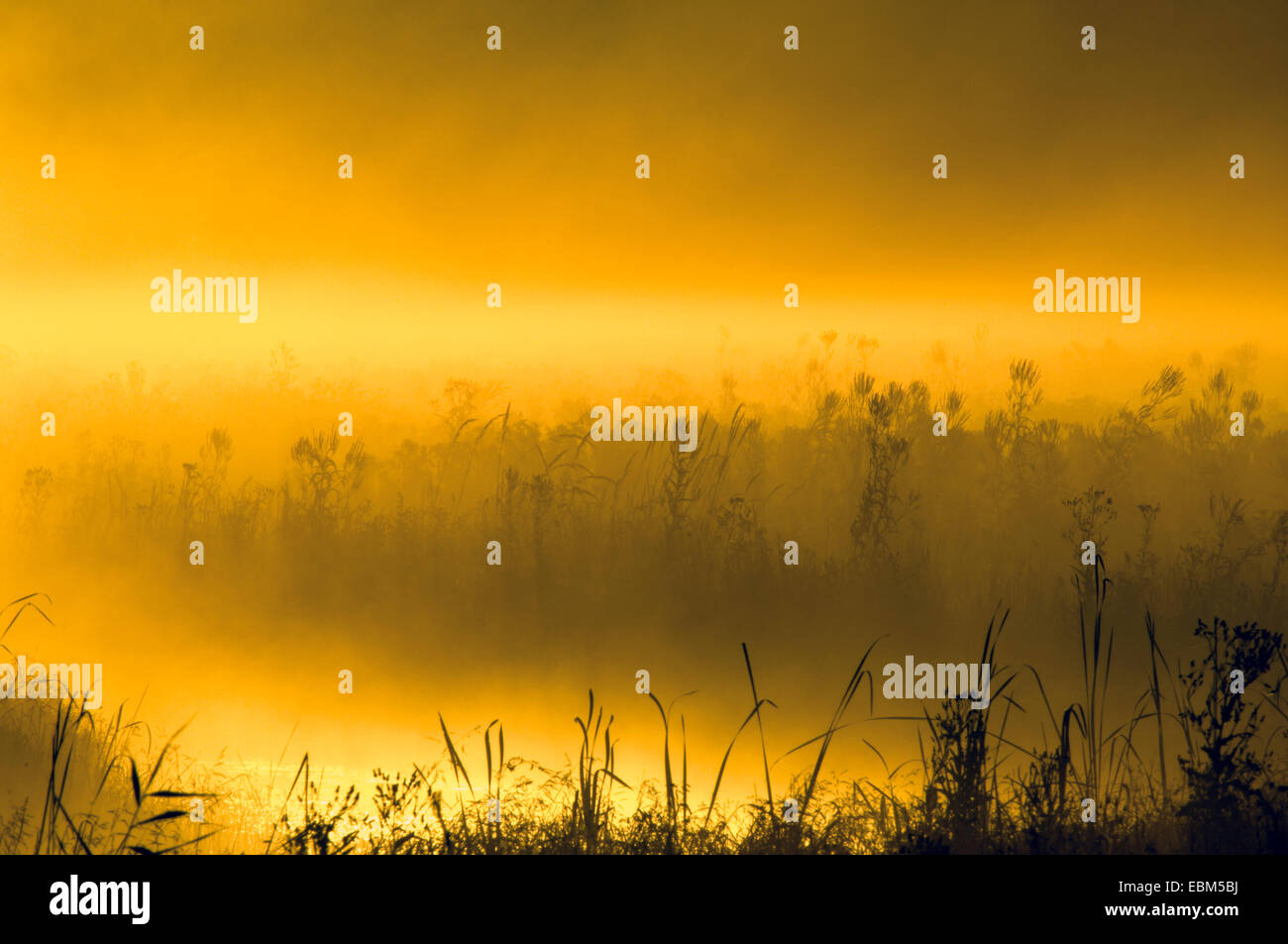 Sunrise on marsh land, near Goose Pond, Linton, Indiana, USA. Stock Photo