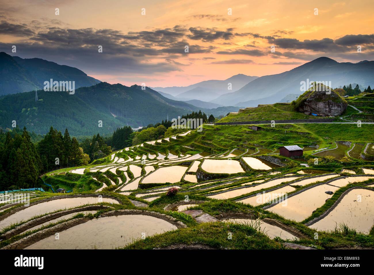 Rice Paddies at Maruyama Senmaida in Kumano, Japan. - Stock Image