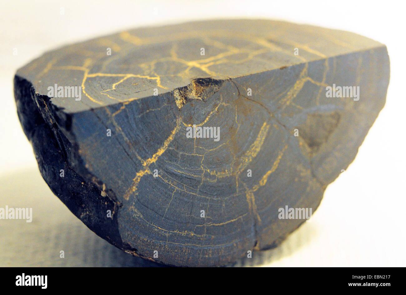 sliced manganese nodule - Stock Image