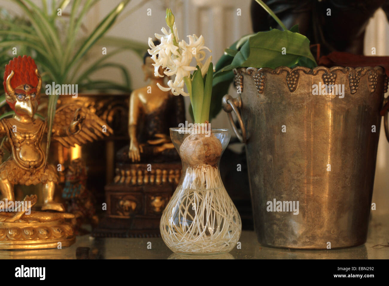 Jacinthe (Hyacinthus orientalis), in a glass Stock Photo