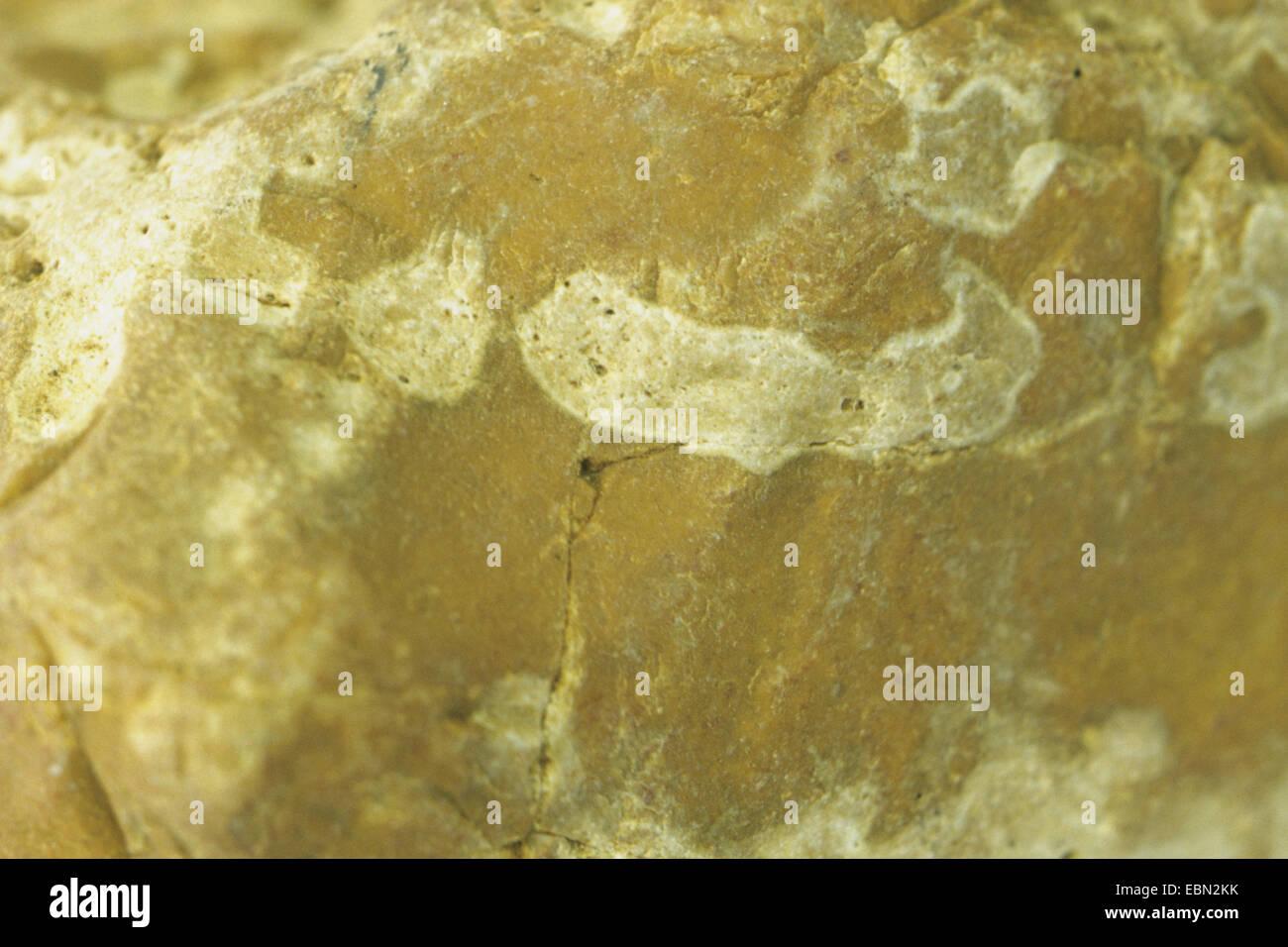 brown flint, Germany, Baltic Sea - Stock Image