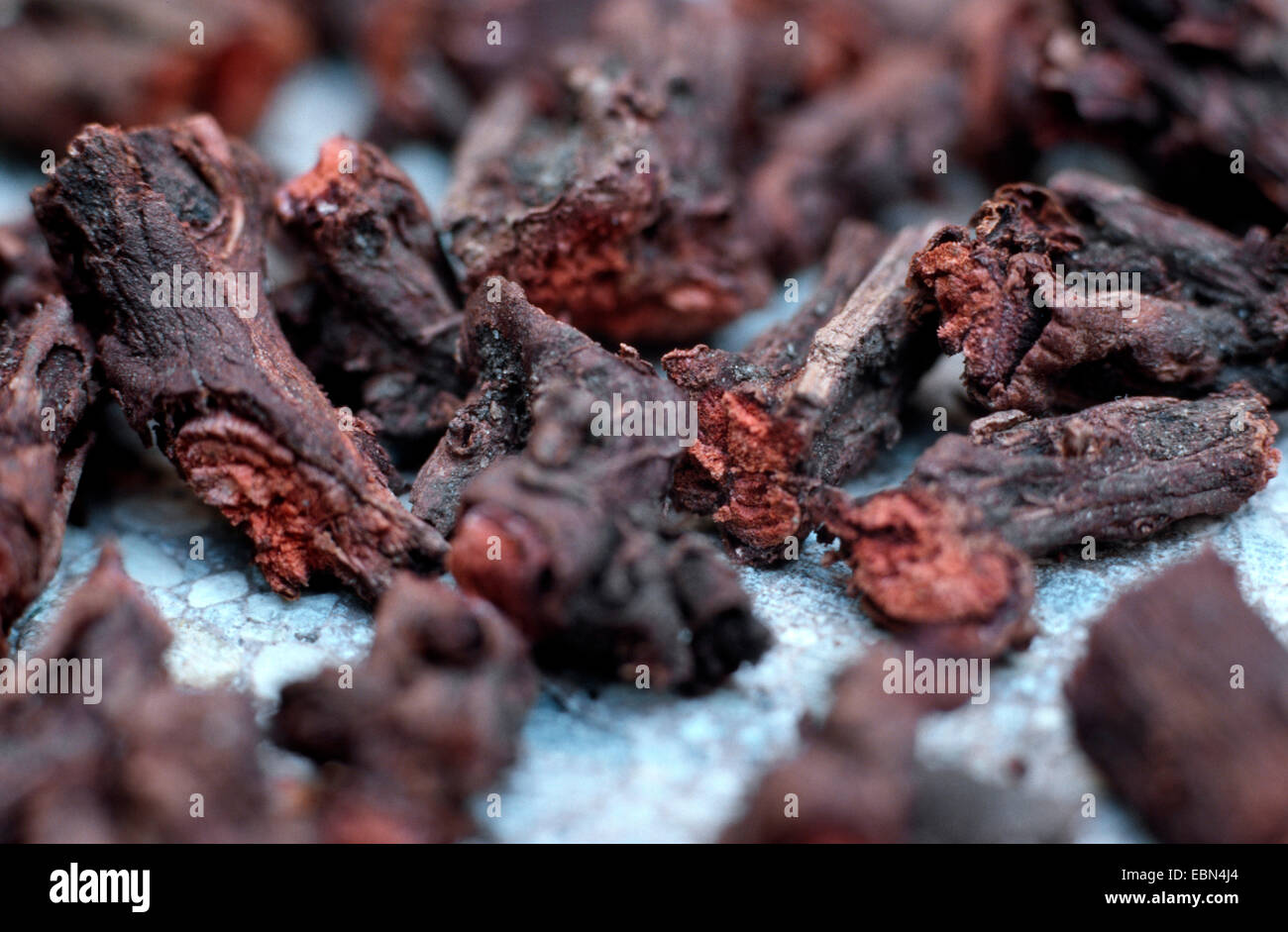 madder (Rubia tinctoria, Rubia tinctorum), hackled pieces of the rootstock - Stock Image