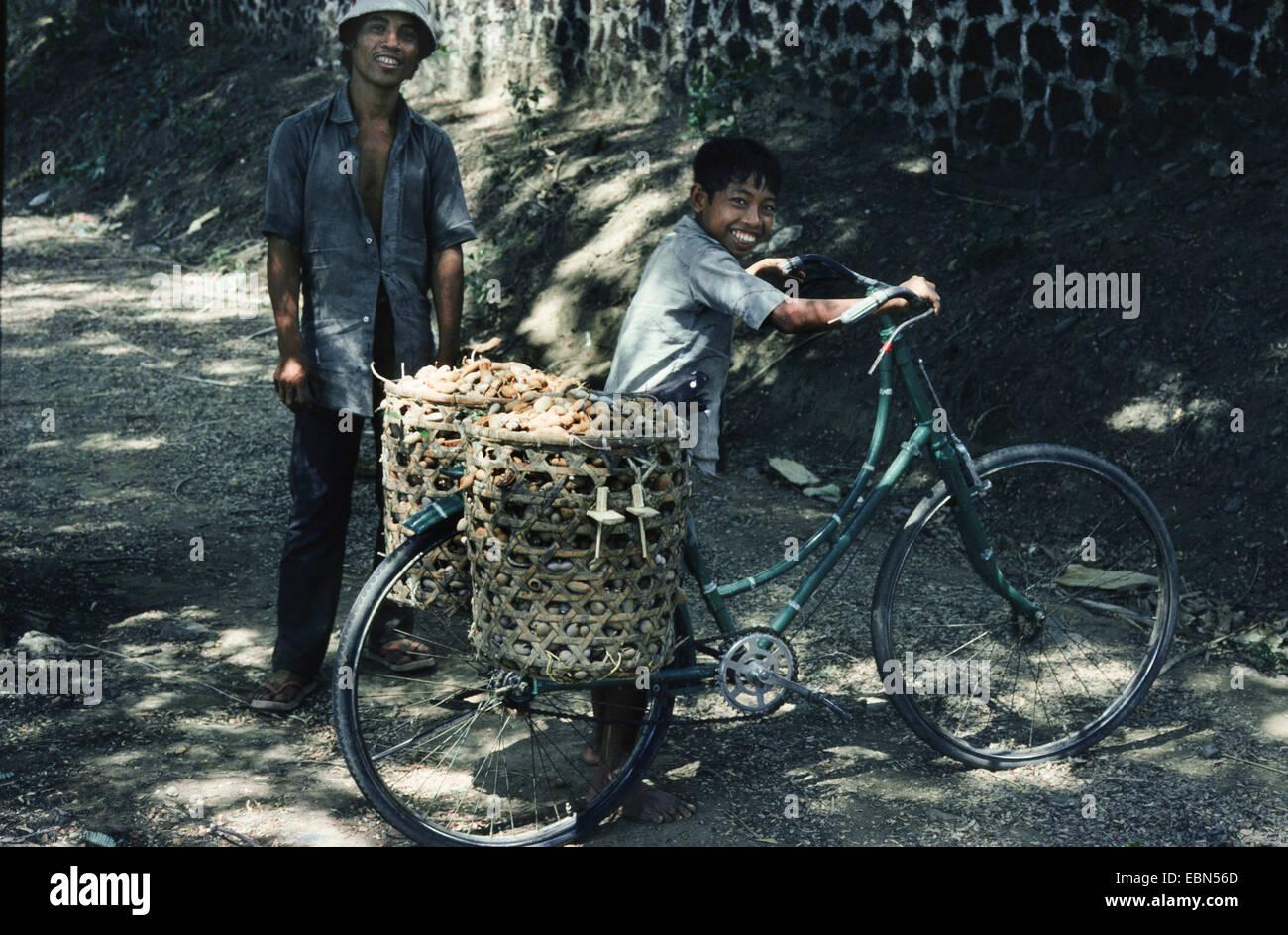 tamarind (Tamarindus indica), child carrying fruits of tamarid by bike, Indonesia, Bali - Stock Image