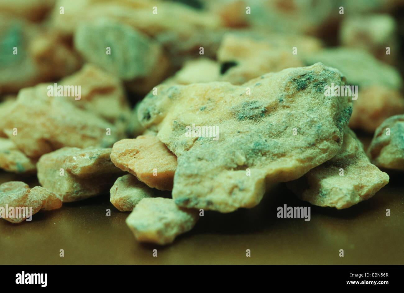 Bezoin, Benzoe Sumatra (Styrax benzoides), resin as insence - Stock Image
