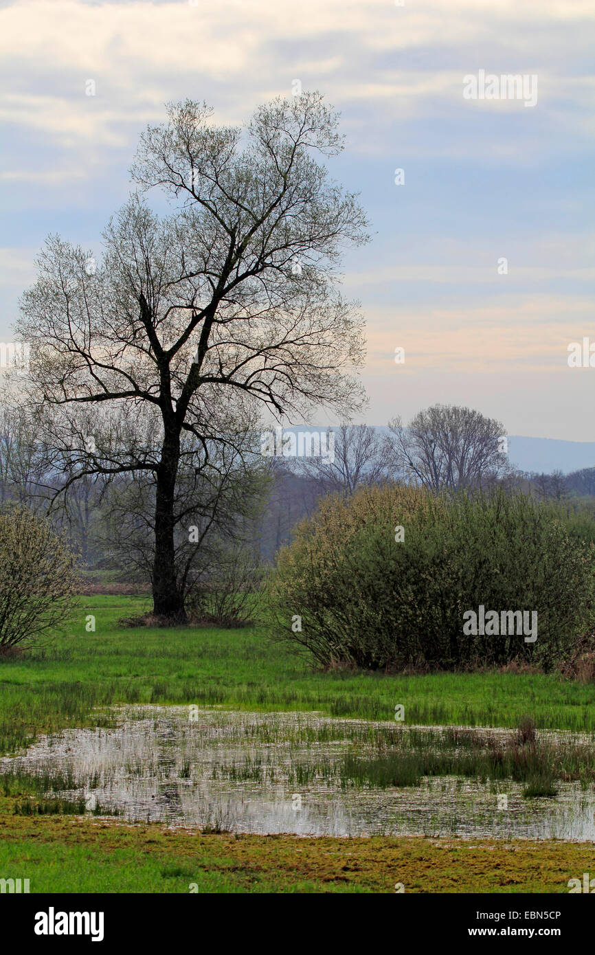 pastureland with meadows, tree and a small lake, Germany, Baden-Wuerttemberg, Ortenau, Kehl - Stock Image