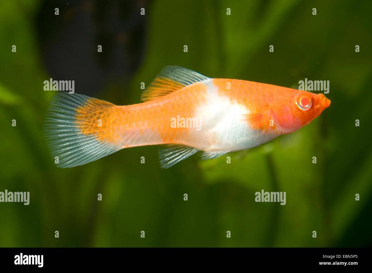 Albino F Stock Photos & Albino F Stock Images - Alamy