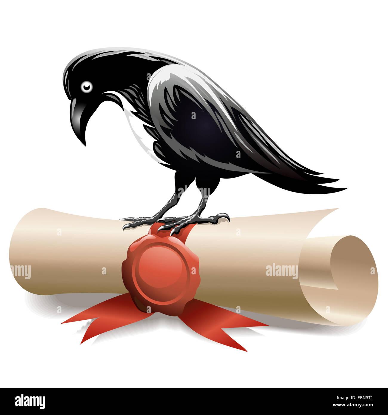 Black raven and diploma - Stock Image
