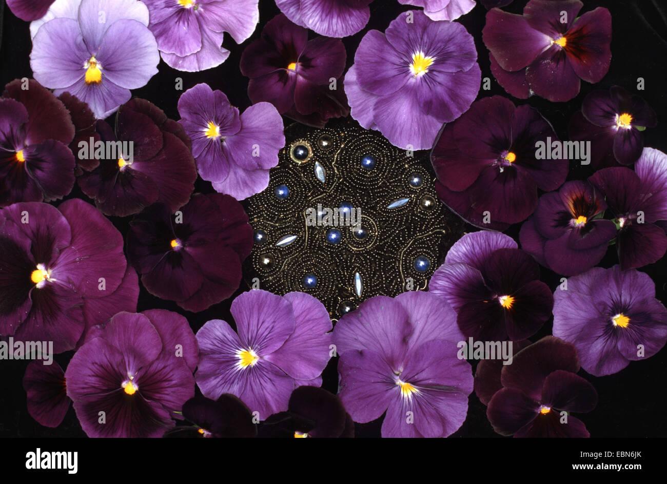 Pansy, Pansy Violet (Viola x wittrockiana, Viola wittrockiana, Viola hybrida), brooch with flowers of pansy - Stock Image