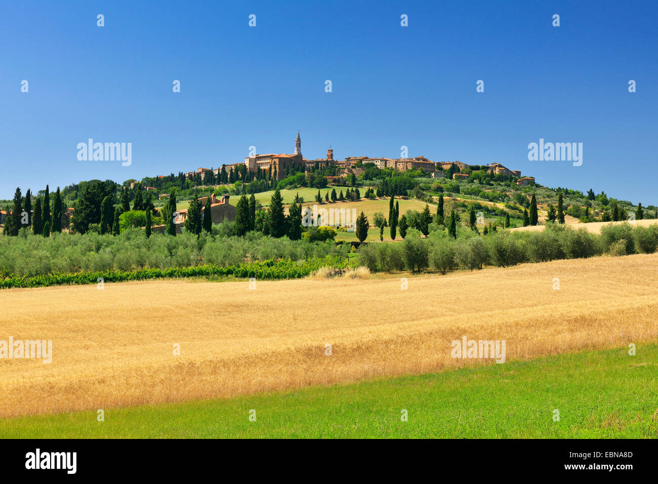 wheat field in summer with historic town of Pienza, Italy, Tuscany, Siena, Pienza - Stock Image