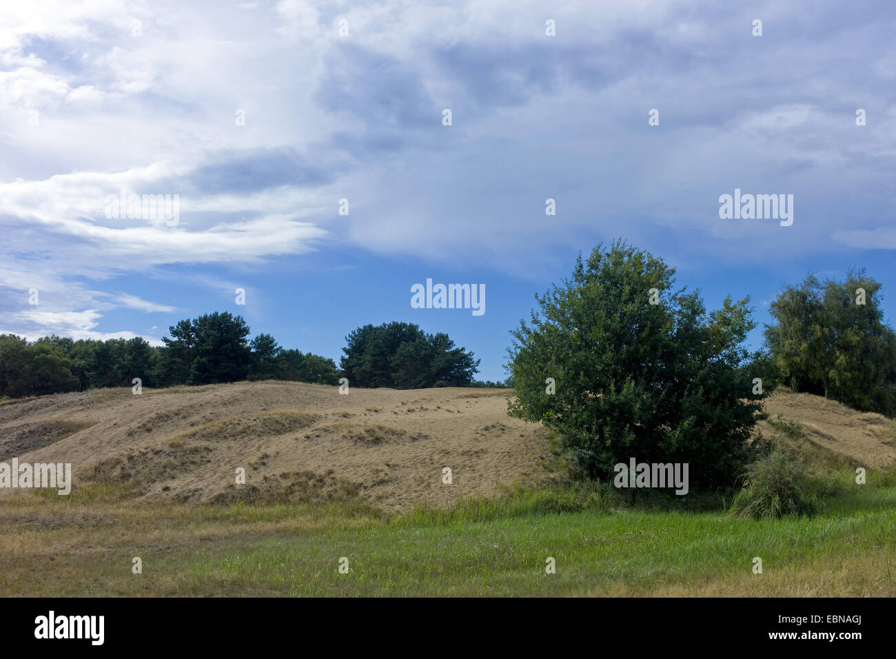 inland dunes, Germany, Mecklenburg-Western Pomerania, Altwarp - Stock Image