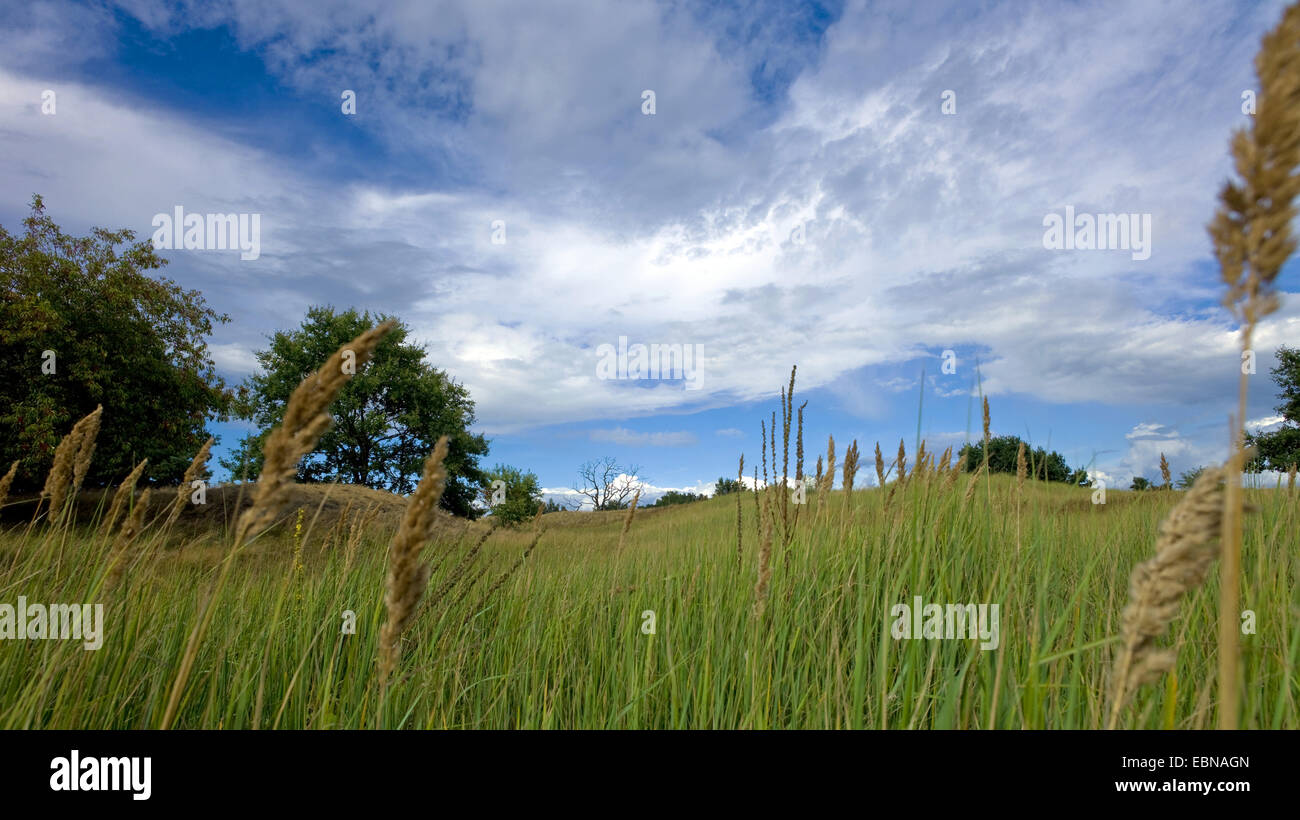 inland dunes, Germany, Mecklenburg-Western Pomerania, Altwarp - Stock Image
