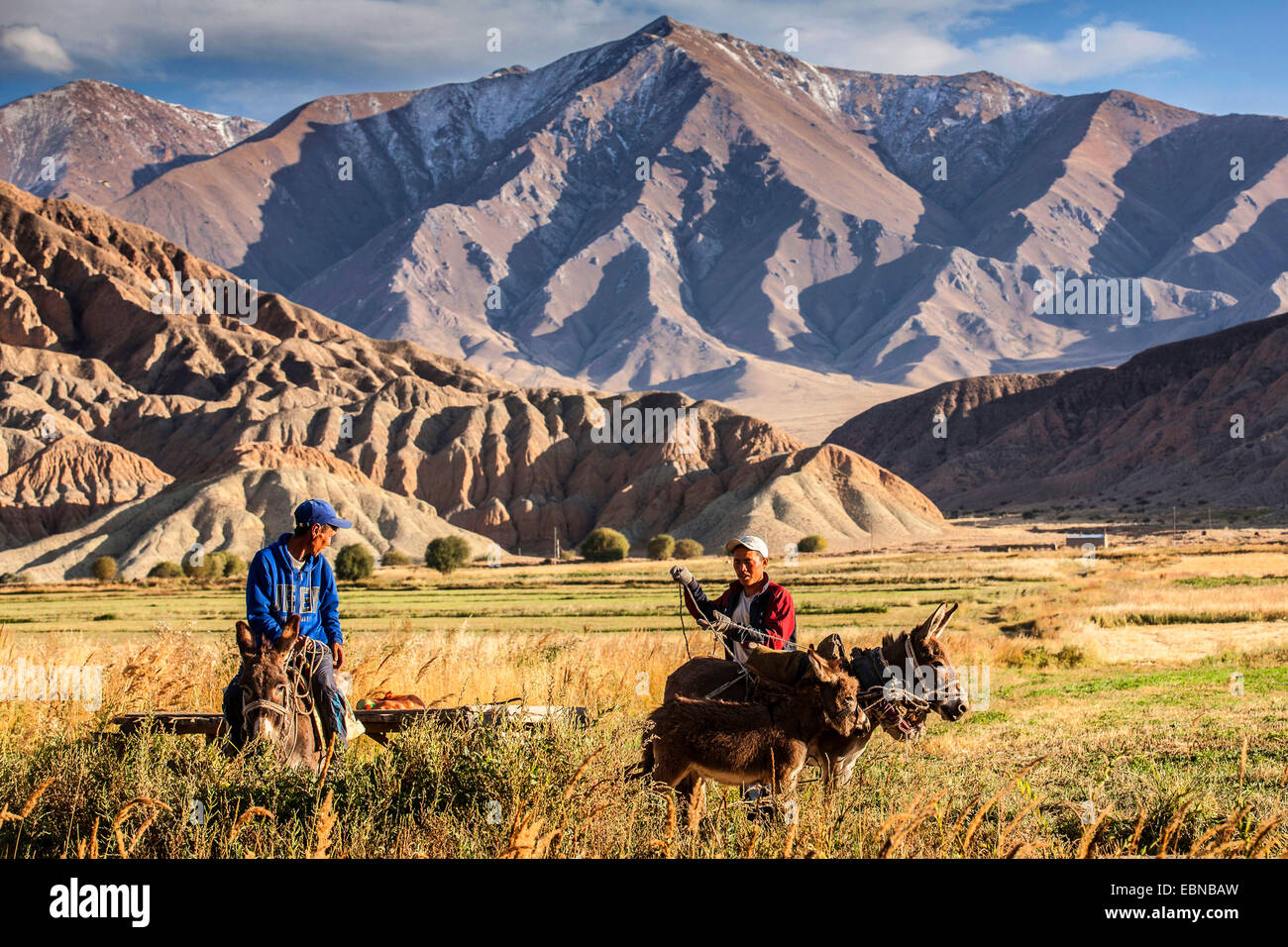 agricultural workers with donkey cart in field landscape, mountain range in background, Kyrgyzstan, Karakoel - Stock Image