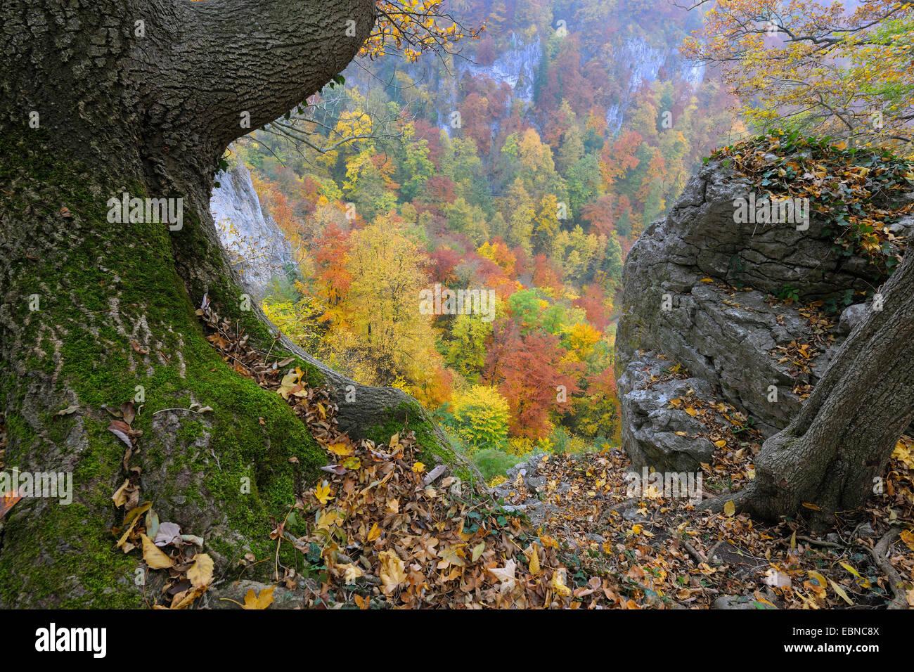 biosphere reserve Schwaebische Alb in autumn, Germany, Baden-Wuerttemberg - Stock Image