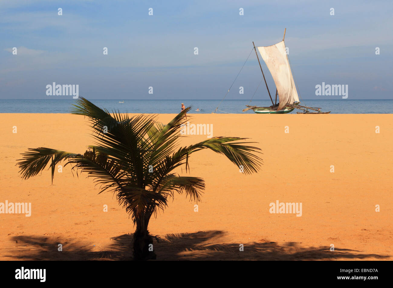 outrigger boat with set sail on the palm beach of Negombo, Sri Lanka - Stock Image