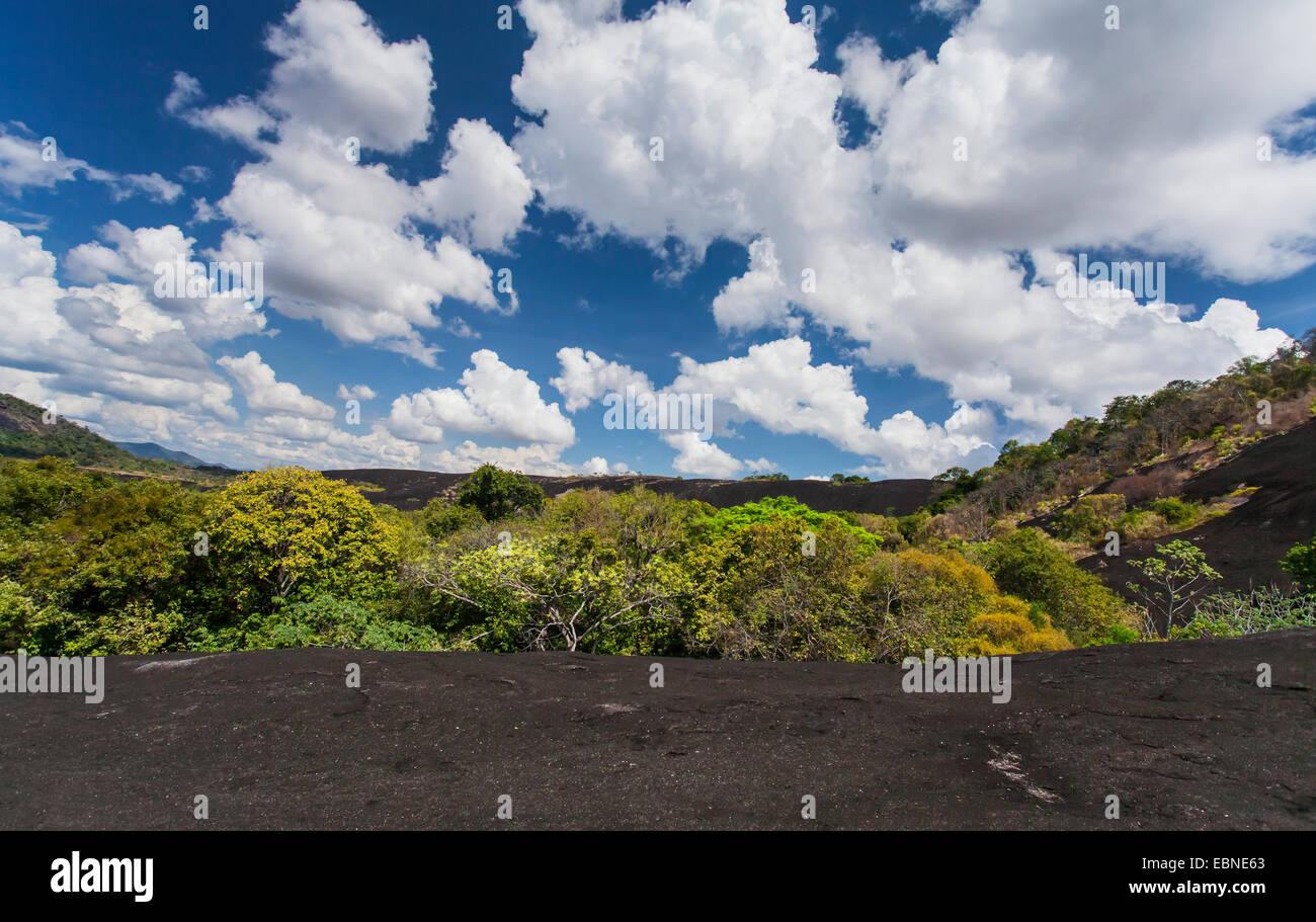 RAINFOREST, south Rupununi, Upper Takutu-Upper Essequibo, Guyana, South America. - Stock Image