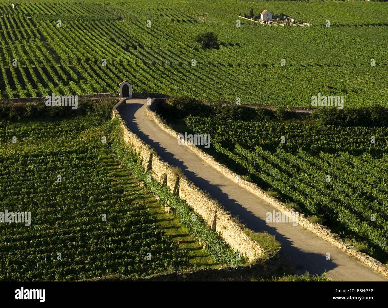street and winery in the midst of vineyards, Austria - Stock Image