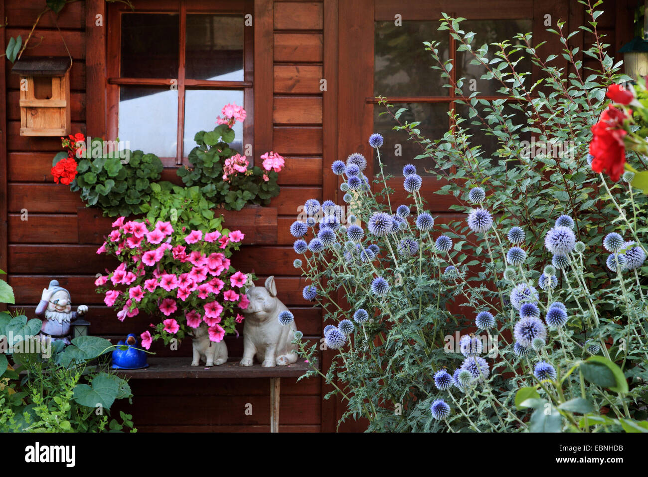 Petunias, geraniums and globe thistles at a garden hut with pigs and garden gnome, Germany - Stock Image