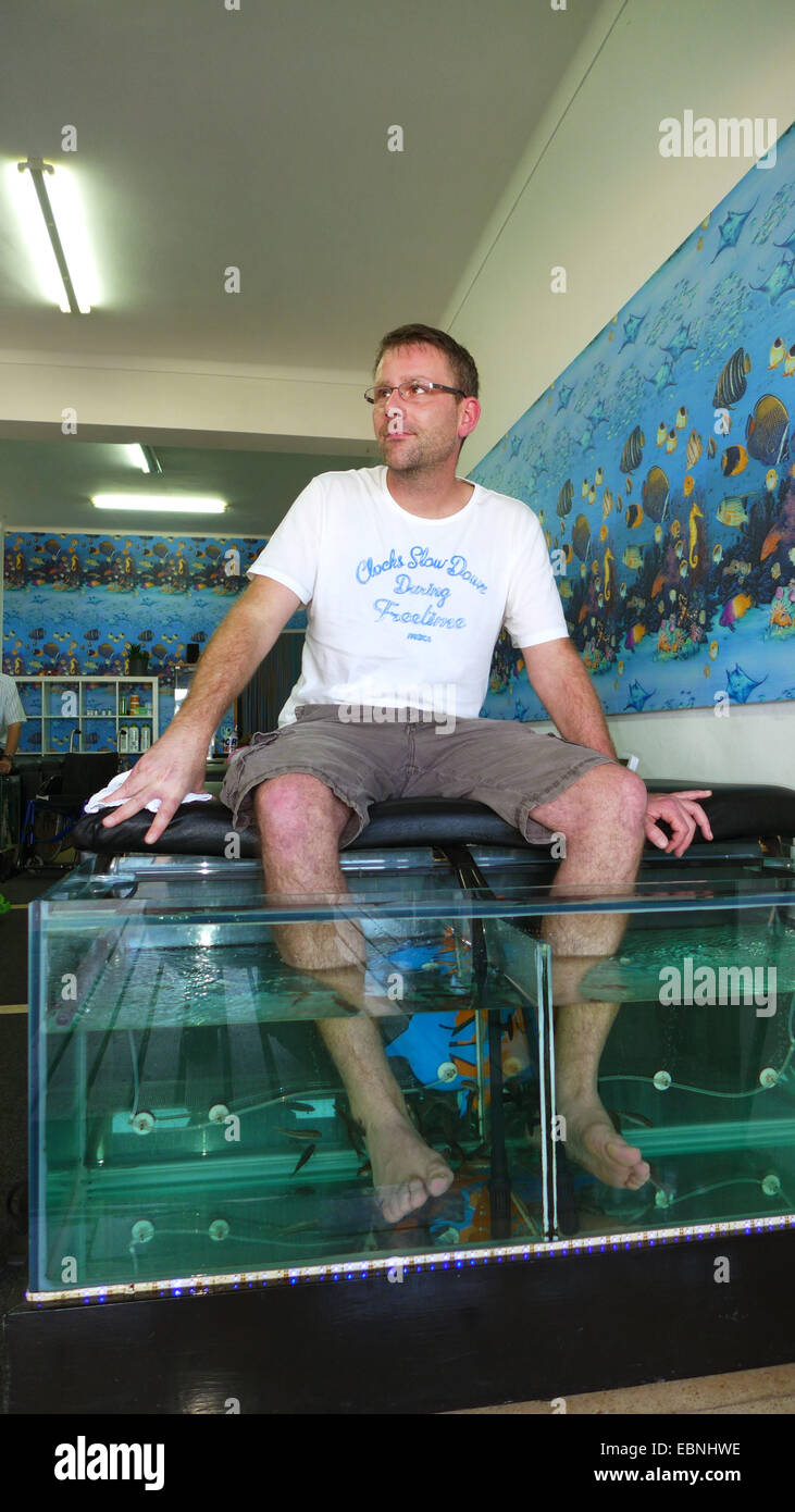 Doctor fish, Nibble fish, Kangal fish (Garra rufa), man in a fish spa, doctor fishes feeding on skin particles of - Stock Image