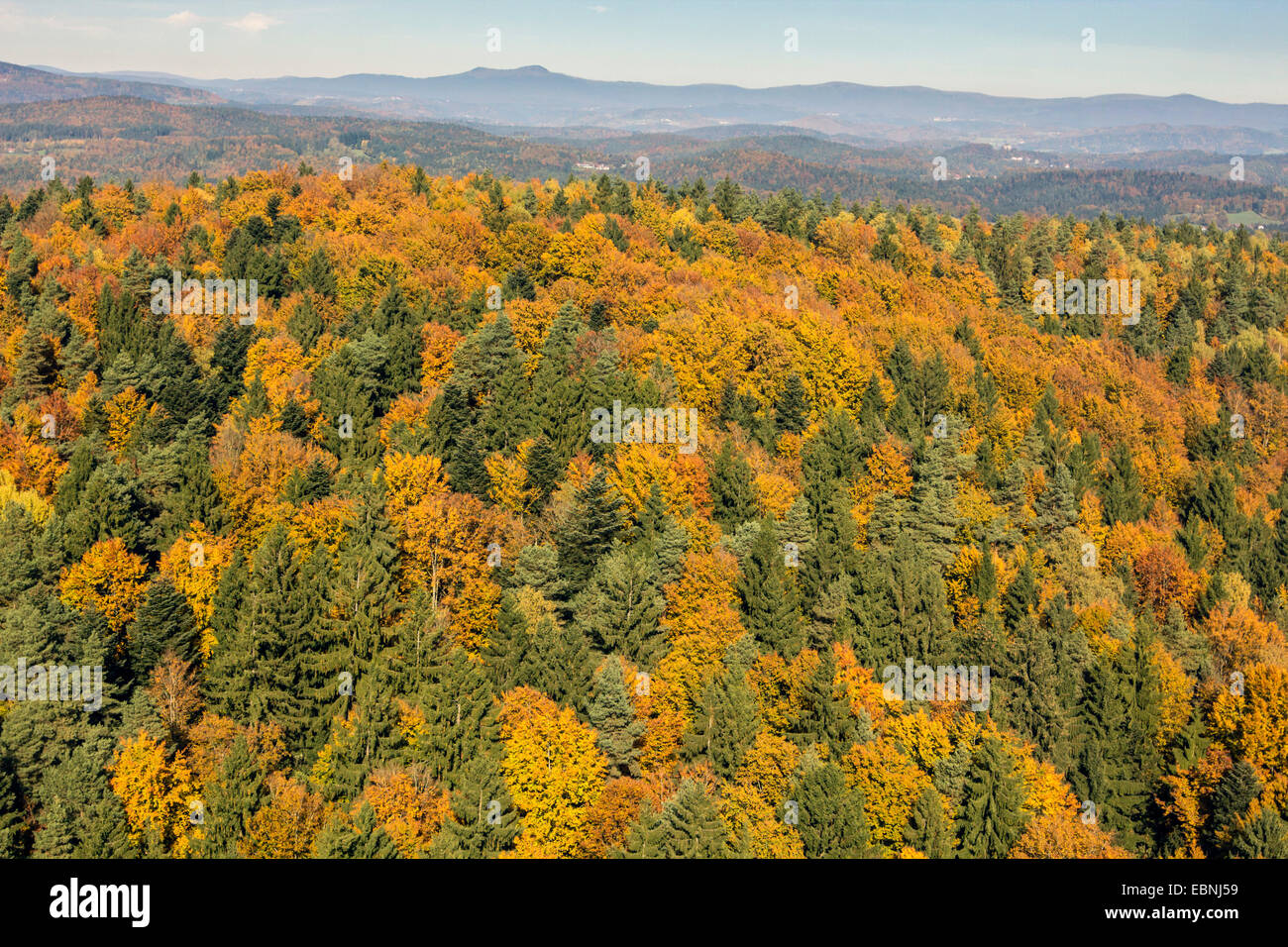 aerial view to spruce and beech forest in autumn, Germany, Bavaria, Bavarian Forest National Park - Stock Image
