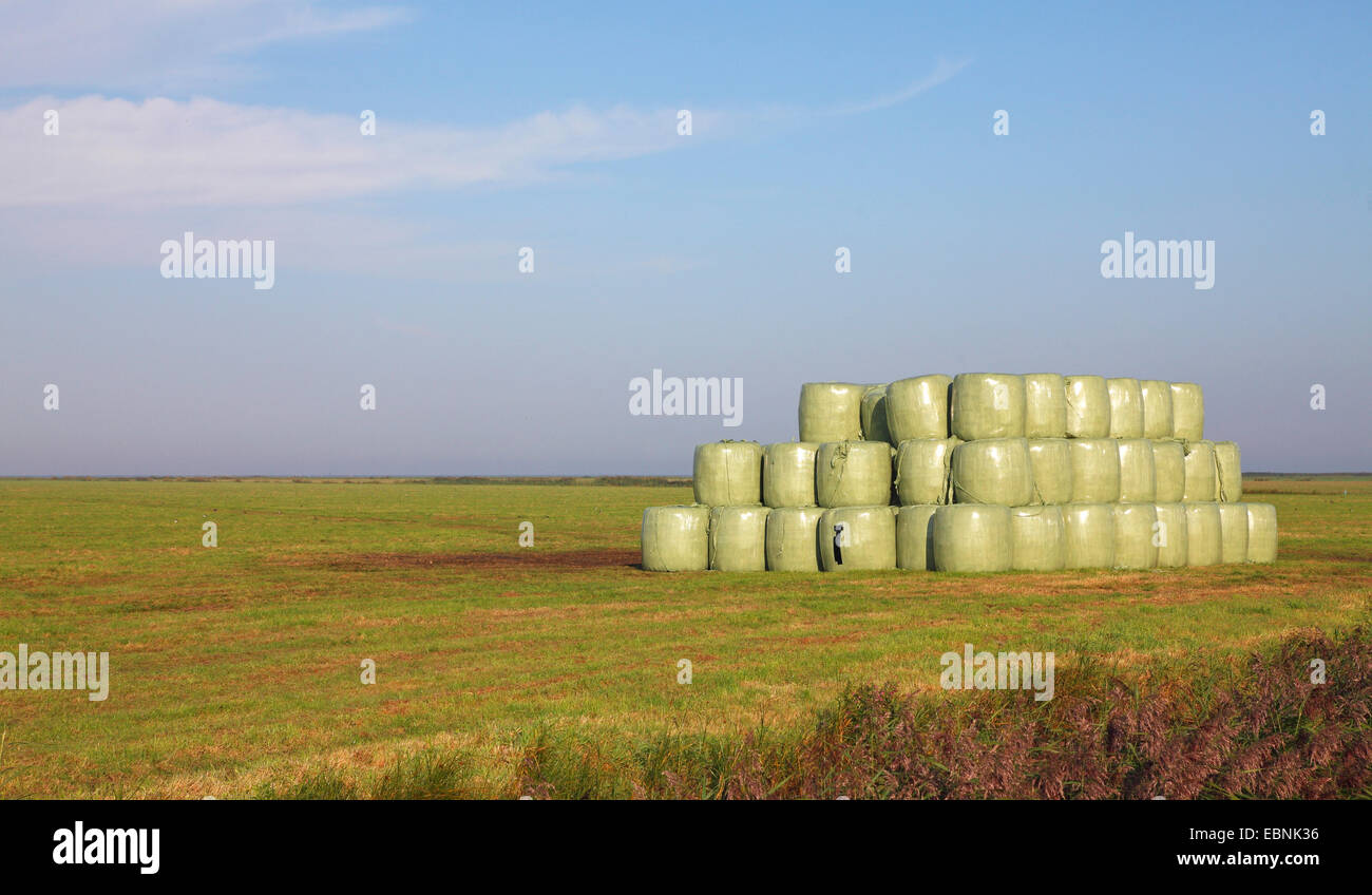stacked hay bails wraped around with a green foil, Netherlands, Frisia - Stock Image