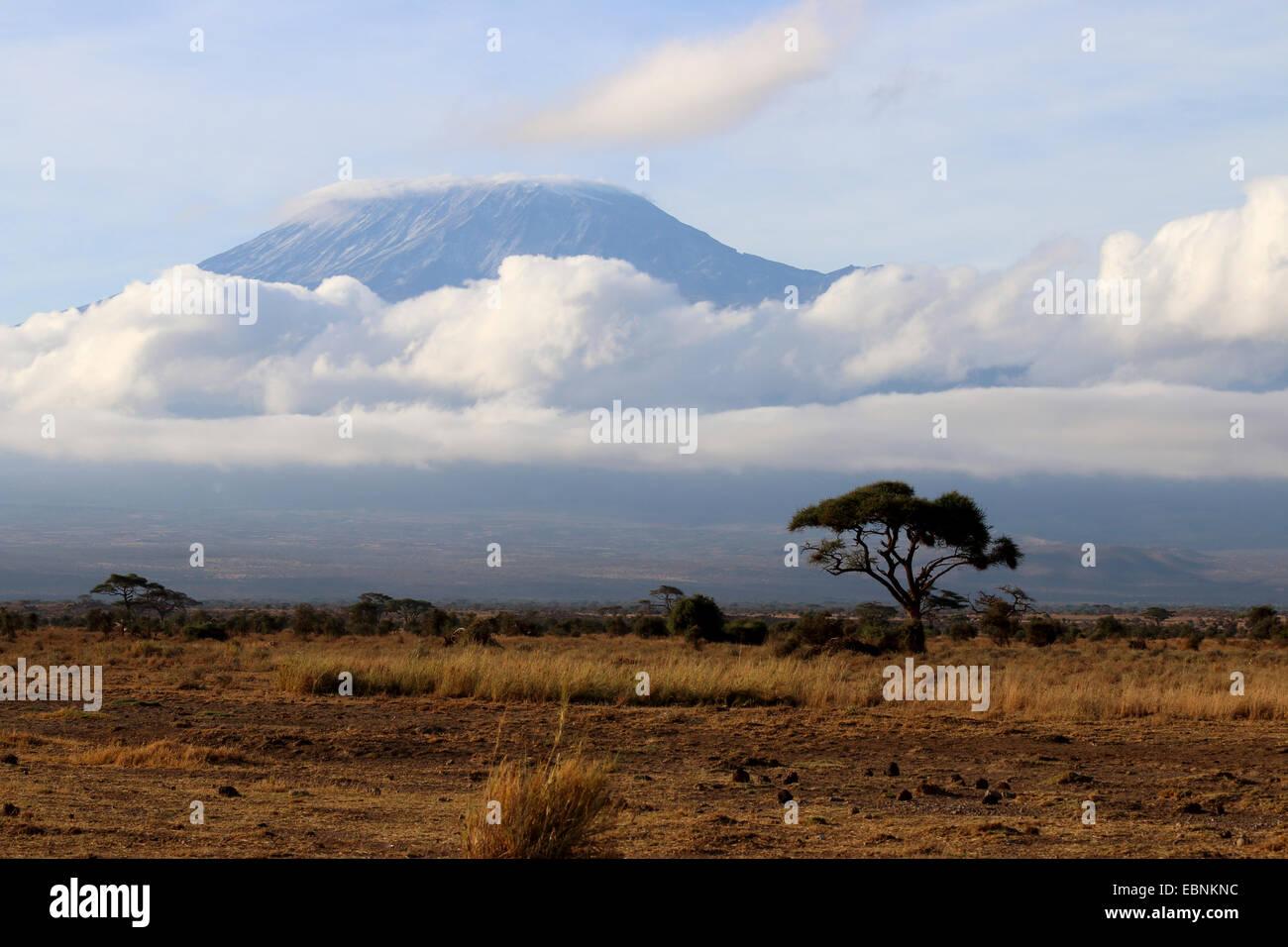 Kilimanjaro, Kenya, Amboseli National Park - Stock Image