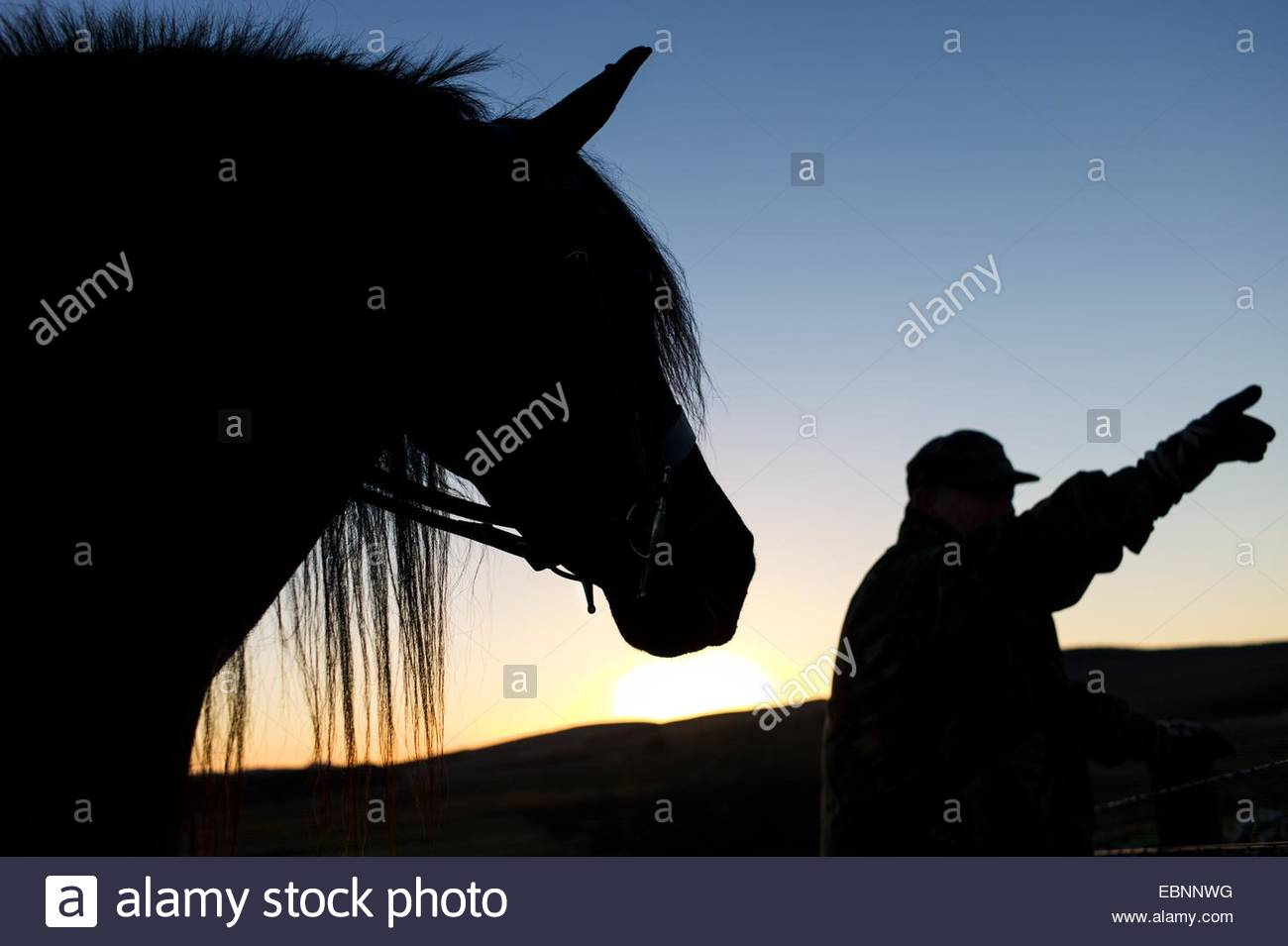 A shepherd out hunting points in the direction of the action while stood next to a fell pony at dusk. - Stock Image