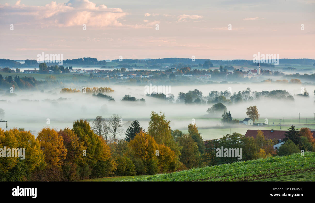 forest and meadows in early morning fog, Germany, Bavaria, Isental, Dorfen - Stock Image