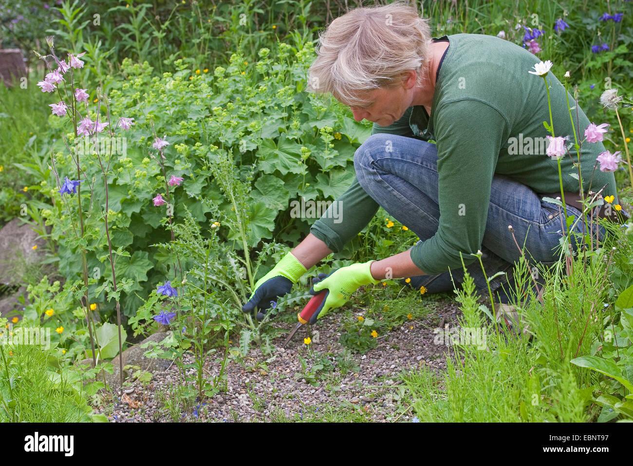 woman weeding the garden, Germany Stock Photo: 76082755 - Alamy