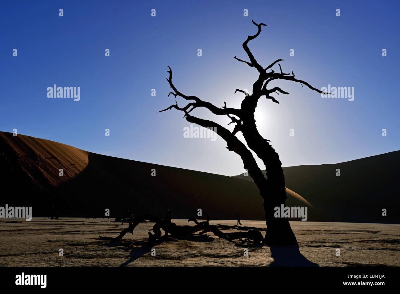 The dead trees valley in desert of Sossusvlei, Namibia, Namib Naukluft National Park Stock Photo