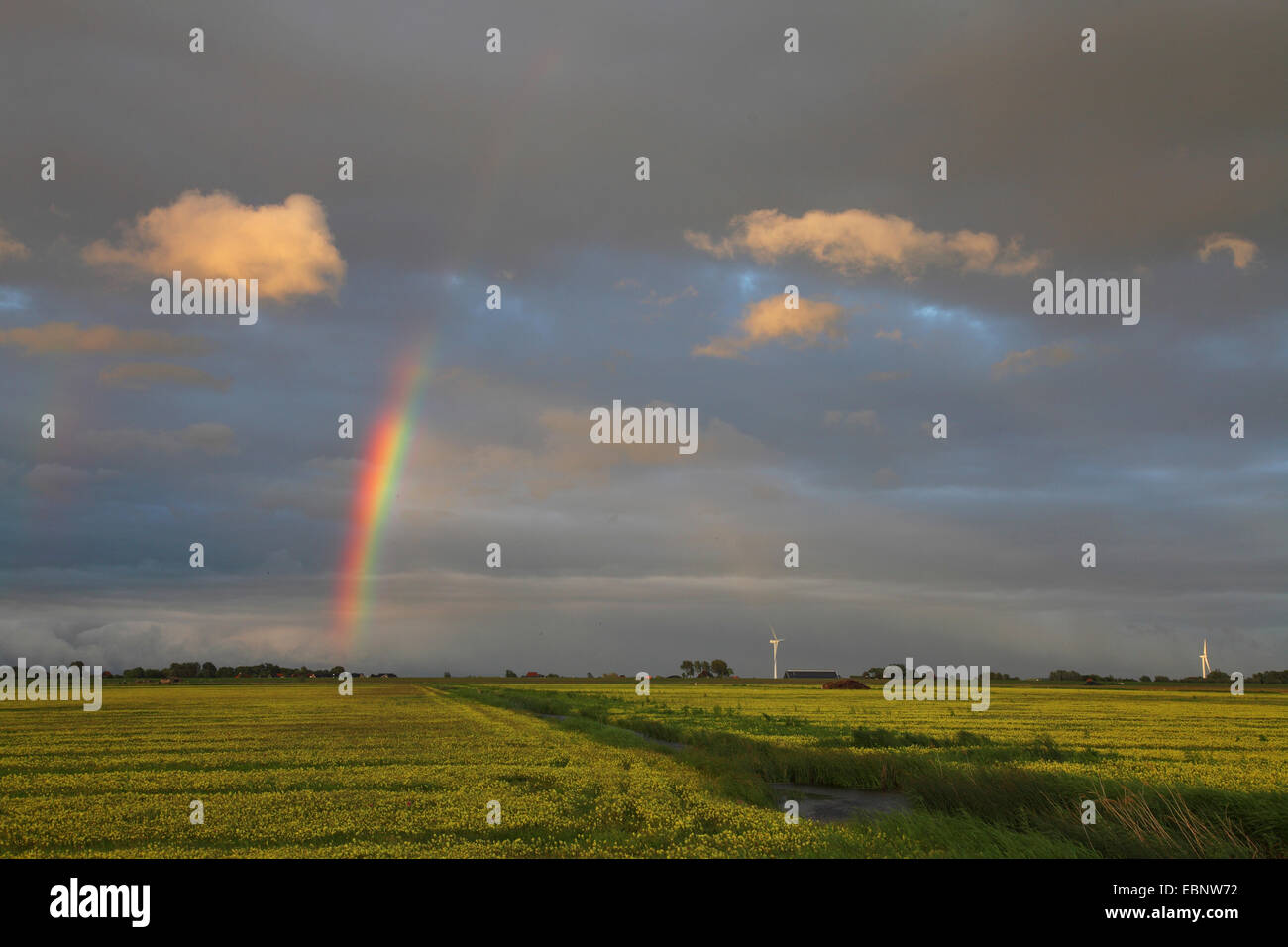 evening mood with a rainbow over marsh meadows near the Ijsselmeer, Netherlands, Frisia, Ijsselmeer Stock Photo