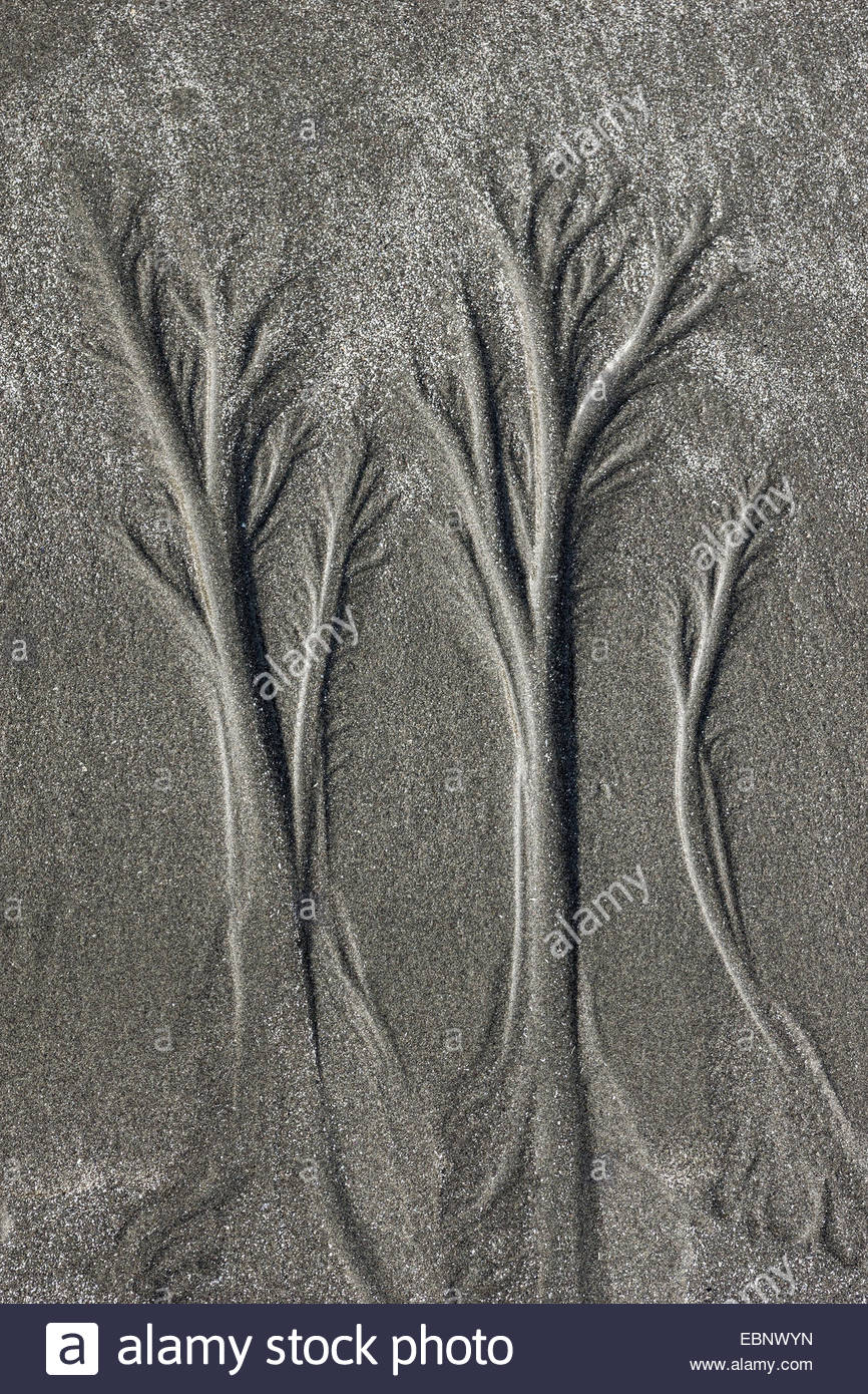 Tide forming tree-like abstract prints in the dark sand of Ruby Beach in Olympic national park - Washington State - Stock Image