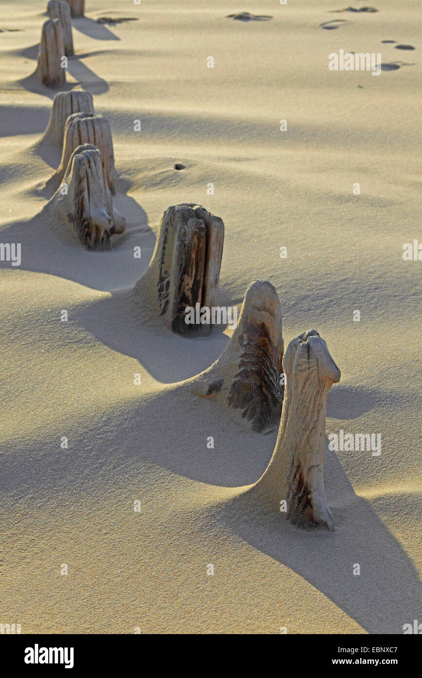 residues of a wooden spur dike at Nordfriesland, Germany, Schleswig-Holstein, Sylt - Stock Image