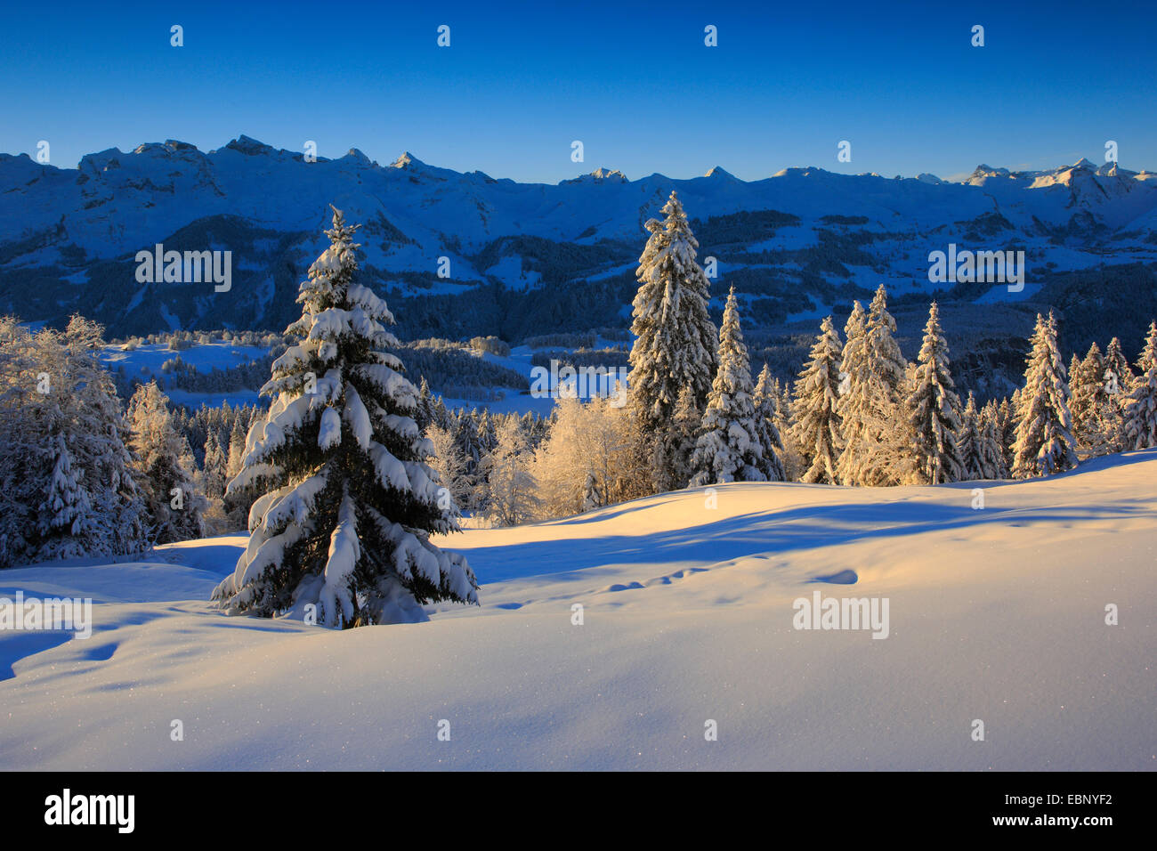 snowy mountain scenery of Central Swiss Alps in morning light, Switzerland - Stock Image
