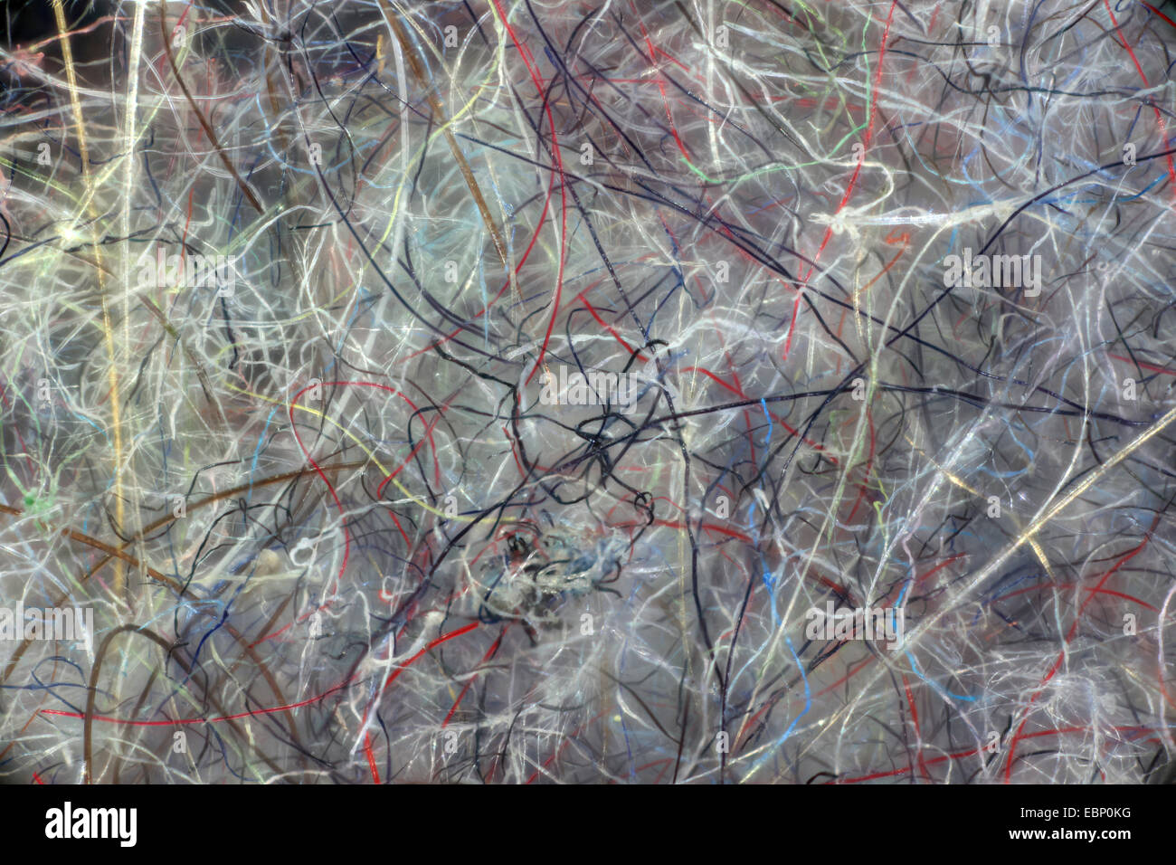 macro shot of dust fluff - Stock Image