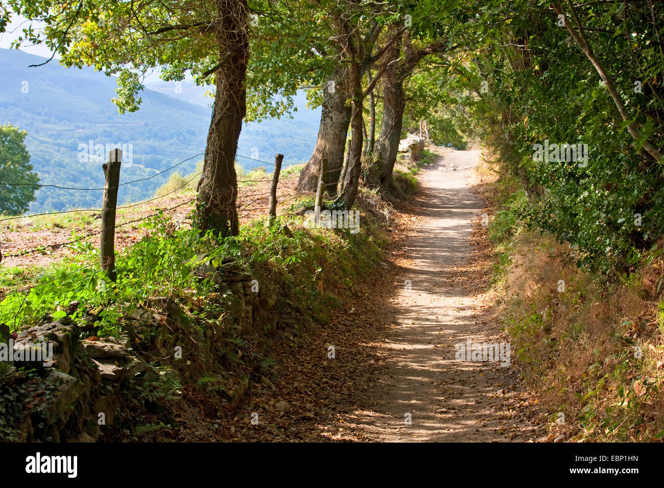 Way of St. James, shady way from Biduedo to Pasantes , Spain, Galicia, Lugo - Stock Image