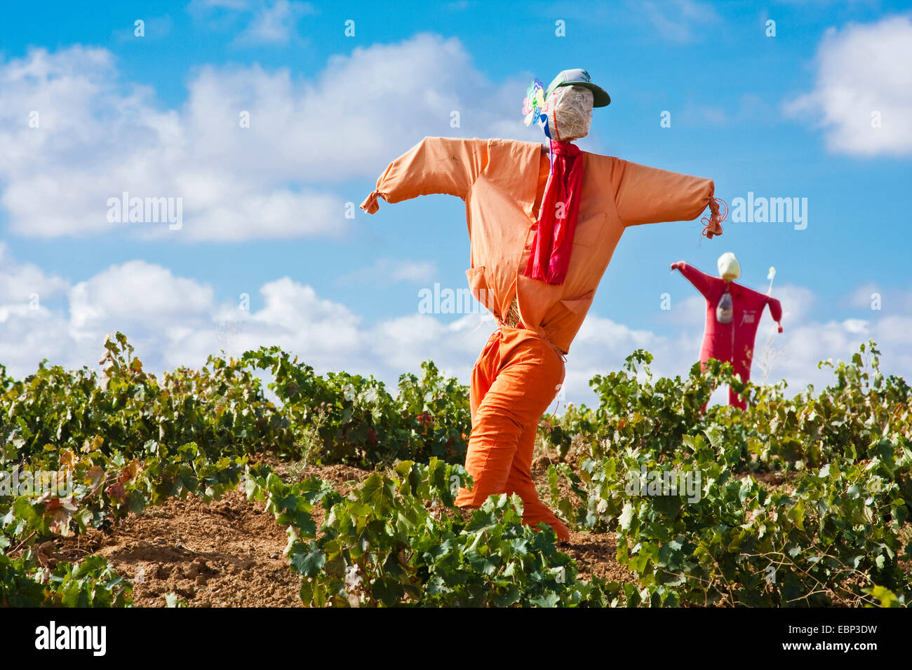 Way of St. James, two frumps in a  vineyard on the way from Moratinos to San Nicol�s del Real Camino, Spain, Kastilien - Stock Image