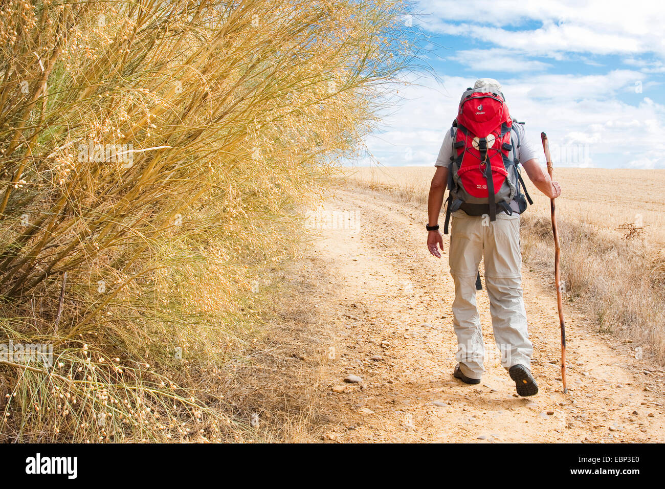 Way of St. James, pilgrim on the arduous way from San Nicol�s del Real Camino to Sahagun,, Spain, Castile and Leon, - Stock Image