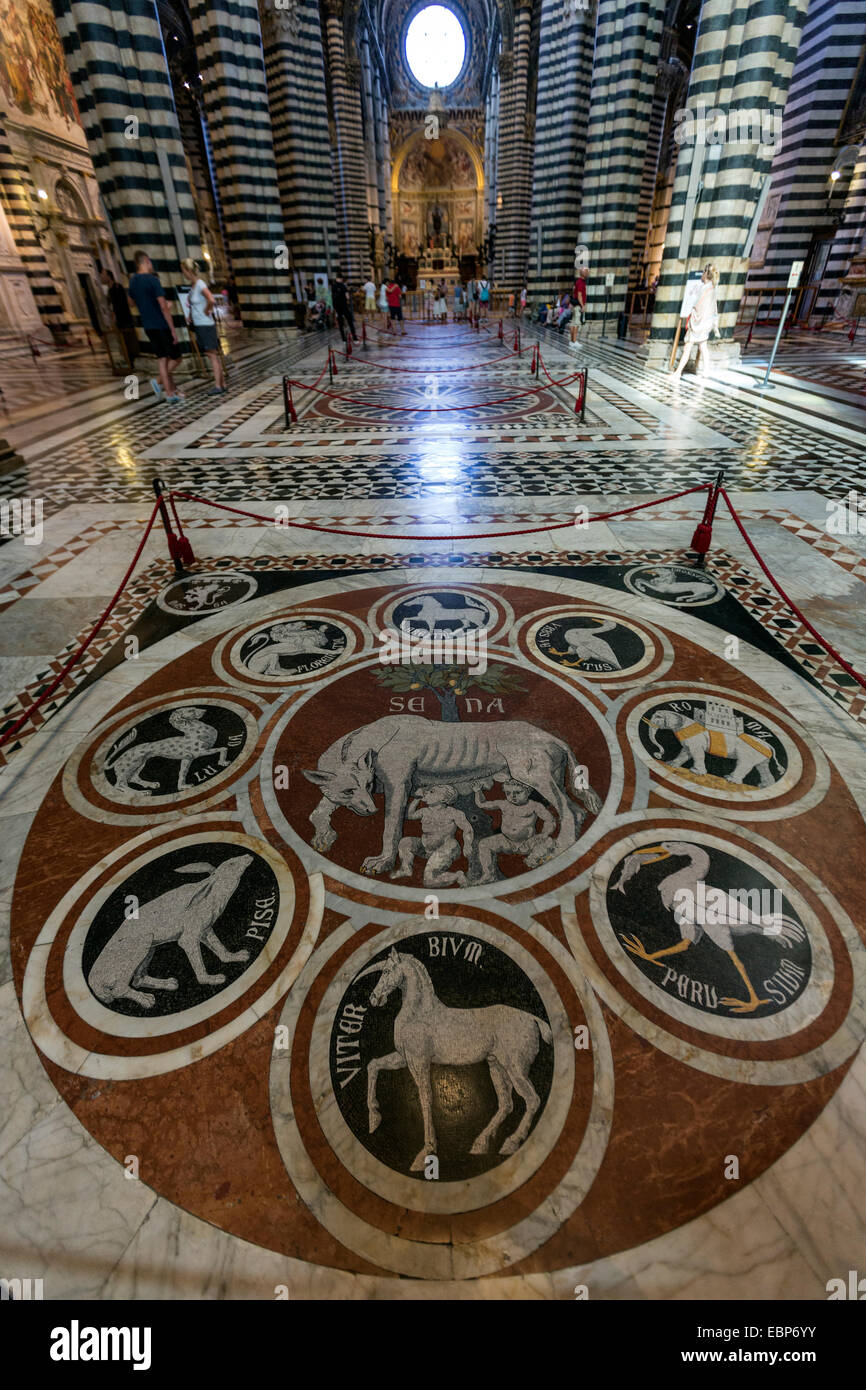 The She-Wolf of Siena, mosaic floor in Siena Cathedral, Duomo di Siena, Tuscany, Italy - Stock Image