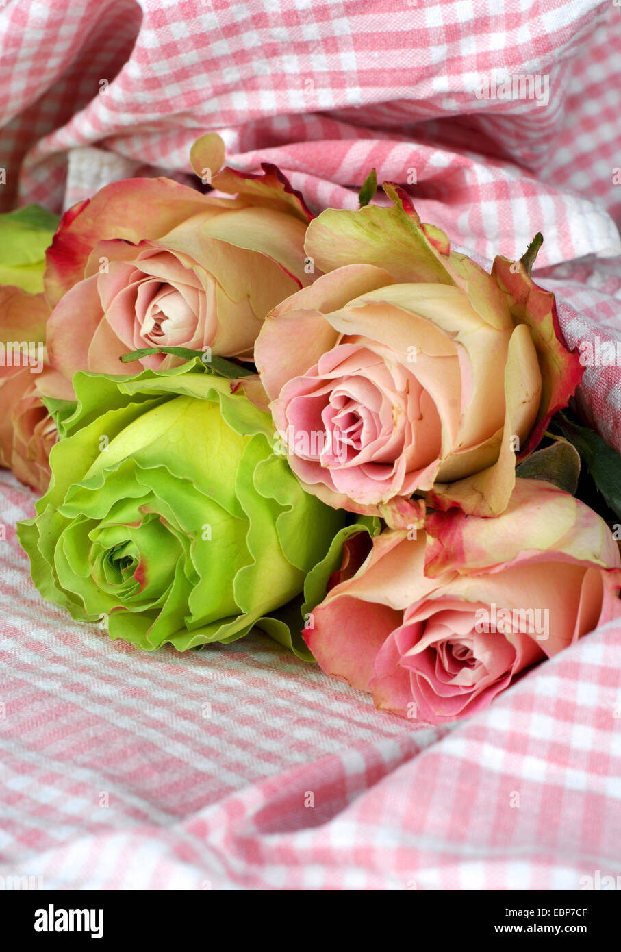 roses on chequered fabric - Stock Image