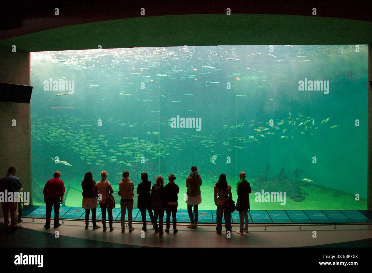 visitors looking to huge fish tank - Stock Image