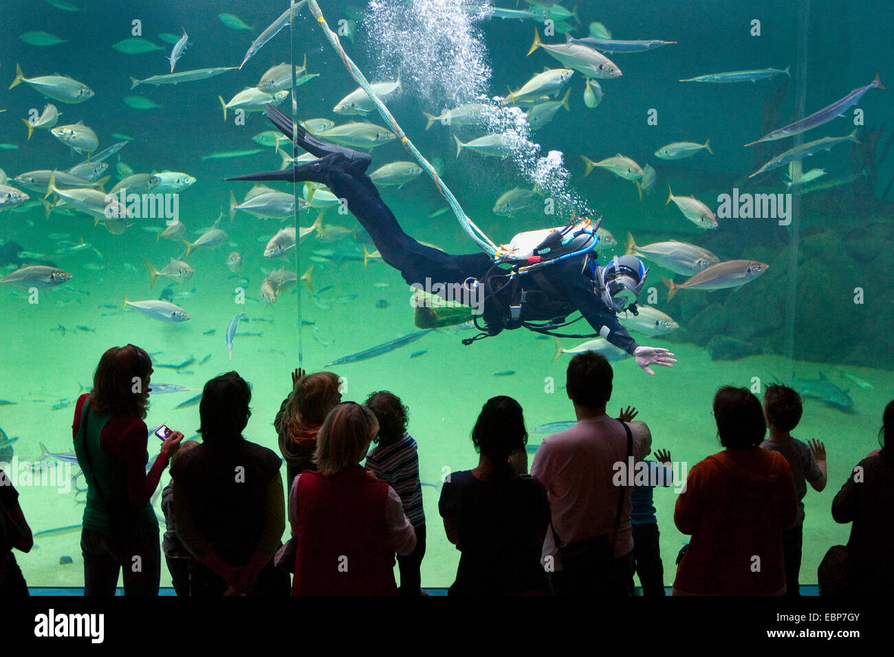 visitors looking to huge fish tank, a diver feeding the fishes - Stock Image