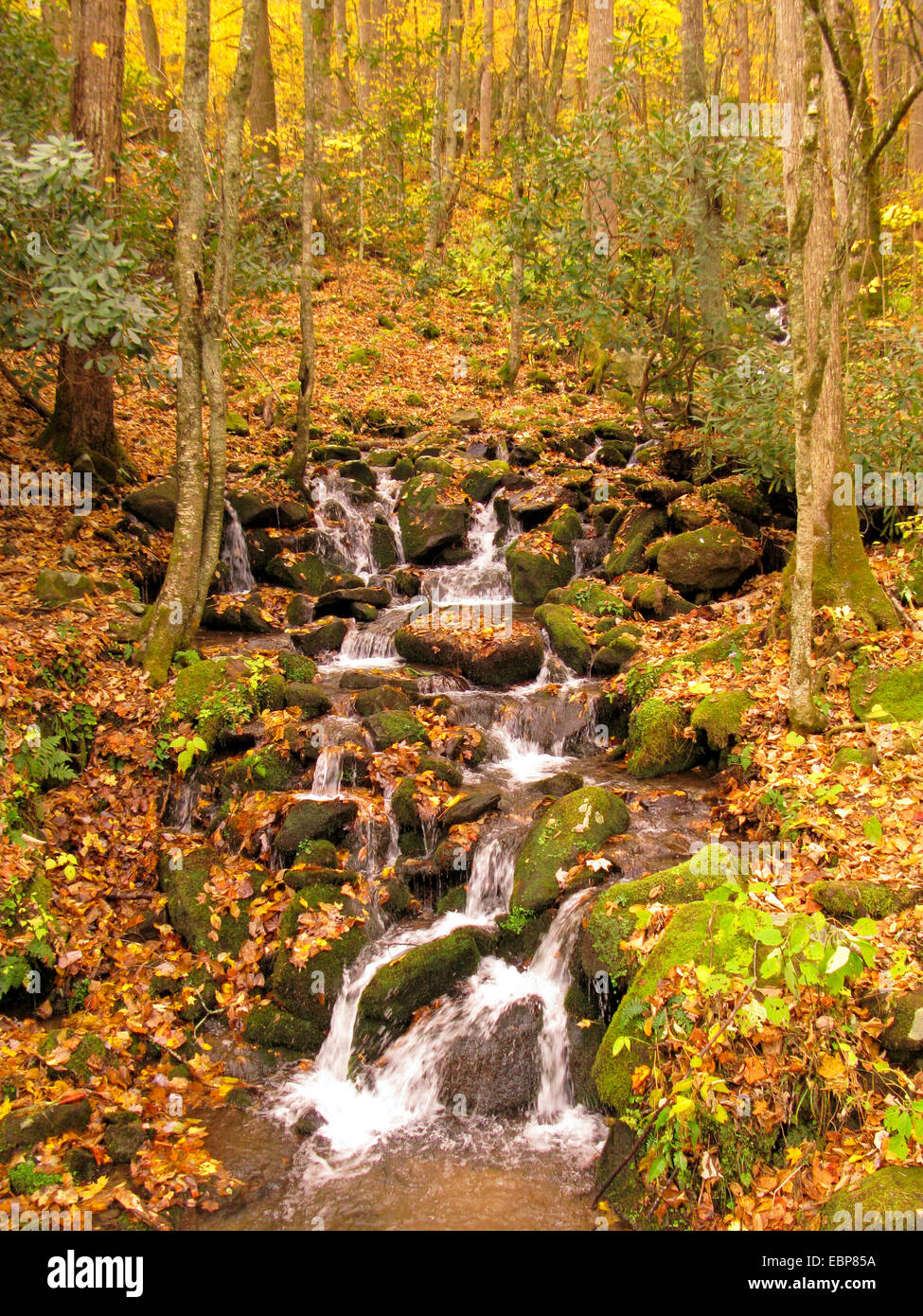 Small stream in Great Smoky Mountains National Park in autumn. - Stock Image