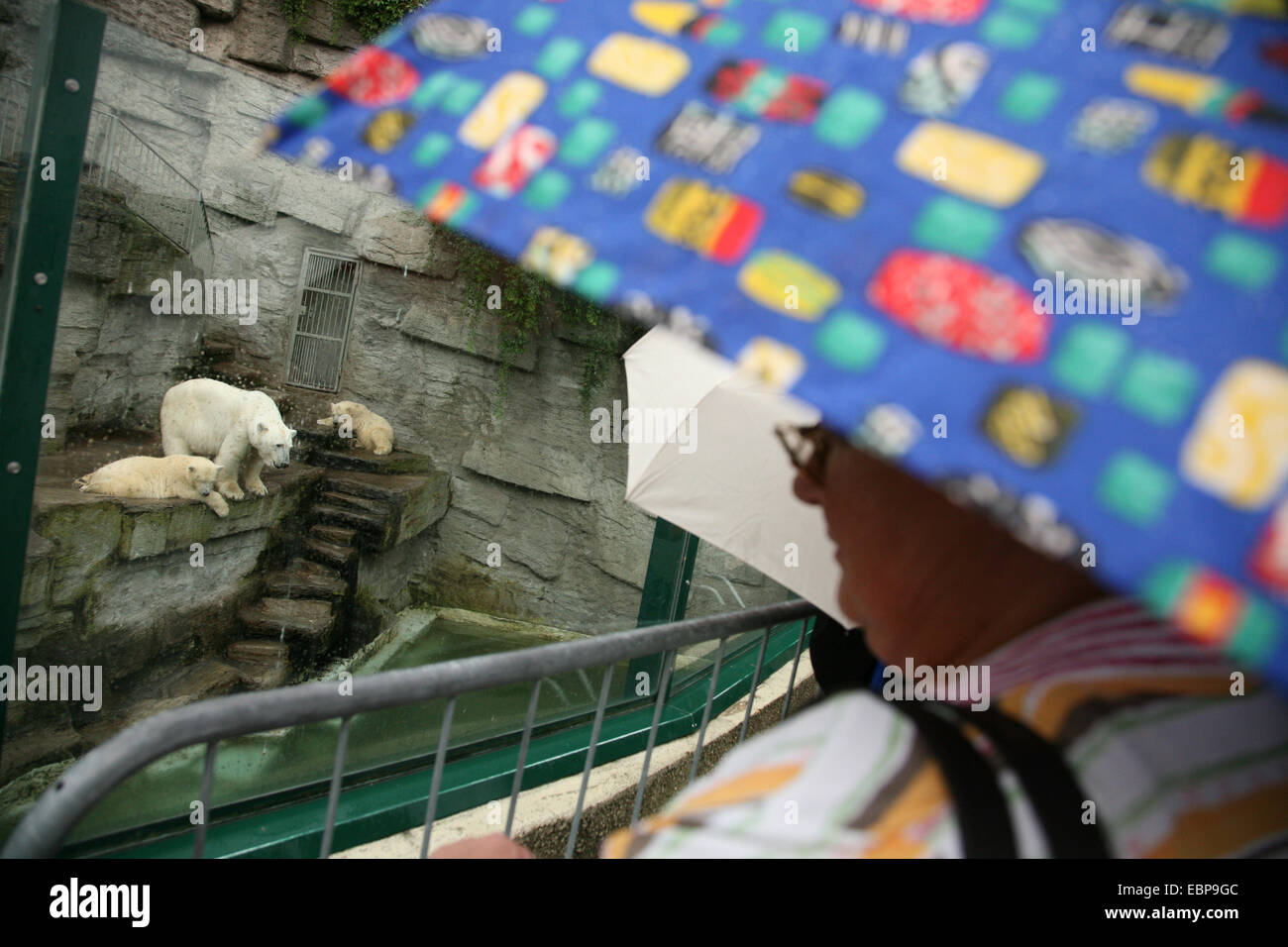 Visitors under umbrellas looks at a polar bear (Ursus maritimus) with two cubs at Schonbrunn Zoo in Vienna, Austria. Stock Photo