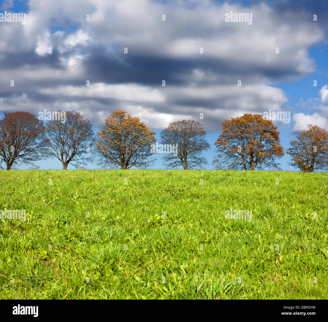 Row of trees with clouds, Meinerzhagen, North Rhine-Westphalia, Germany, Europe - Stock Image